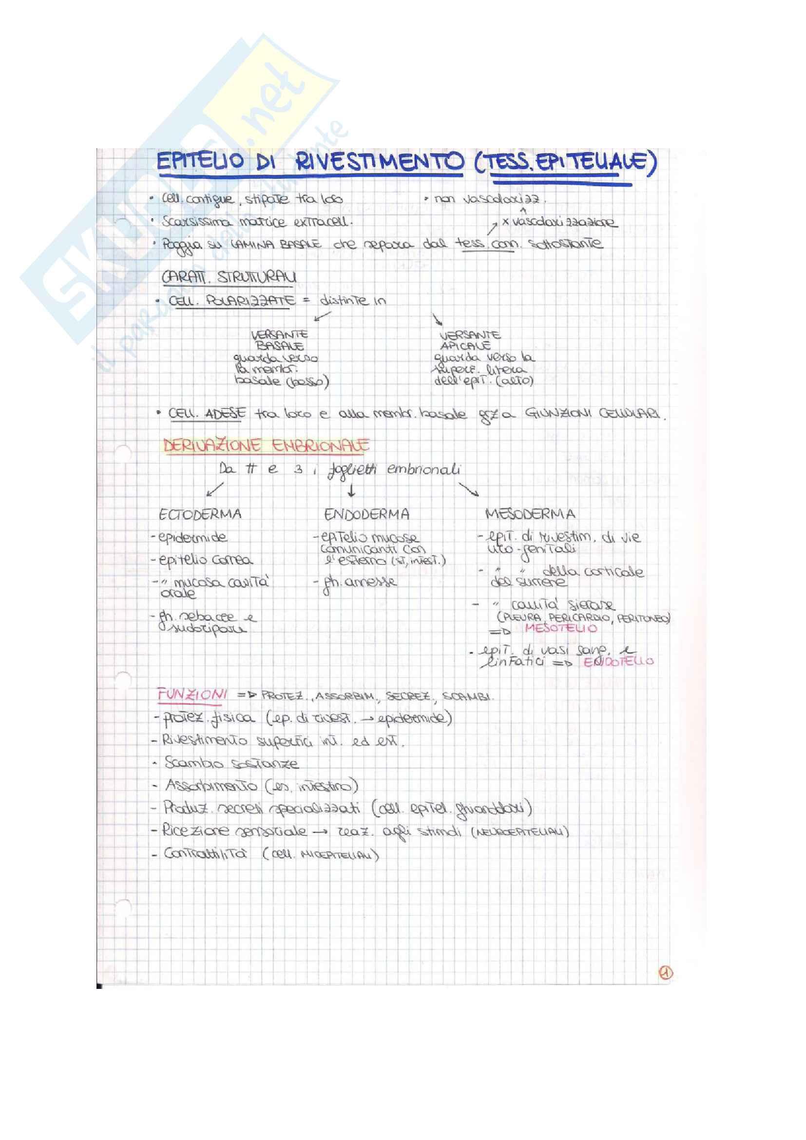 Istologia (esame istologia ed embriologia)