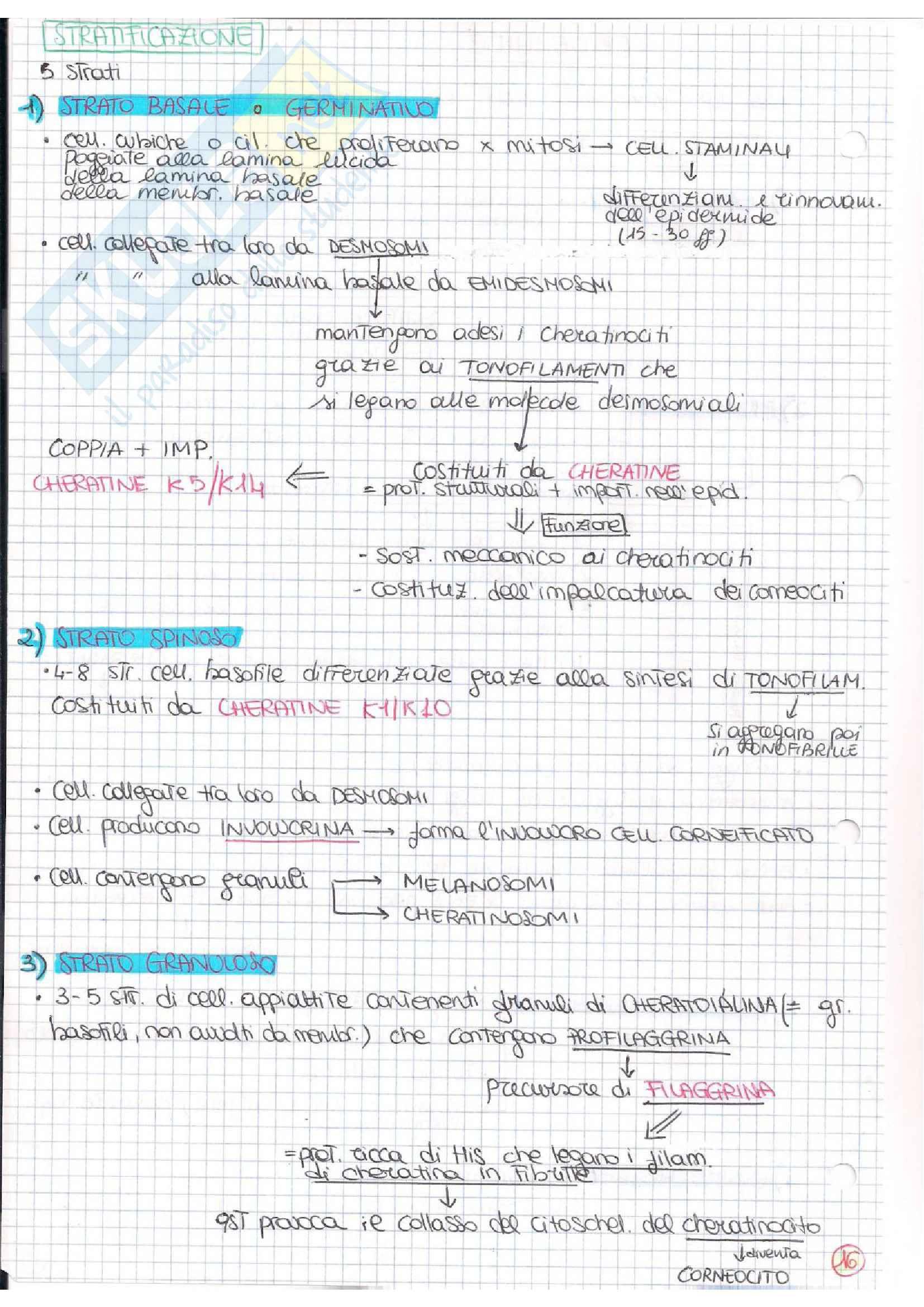 Istologia (esame istologia ed embriologia) Pag. 16