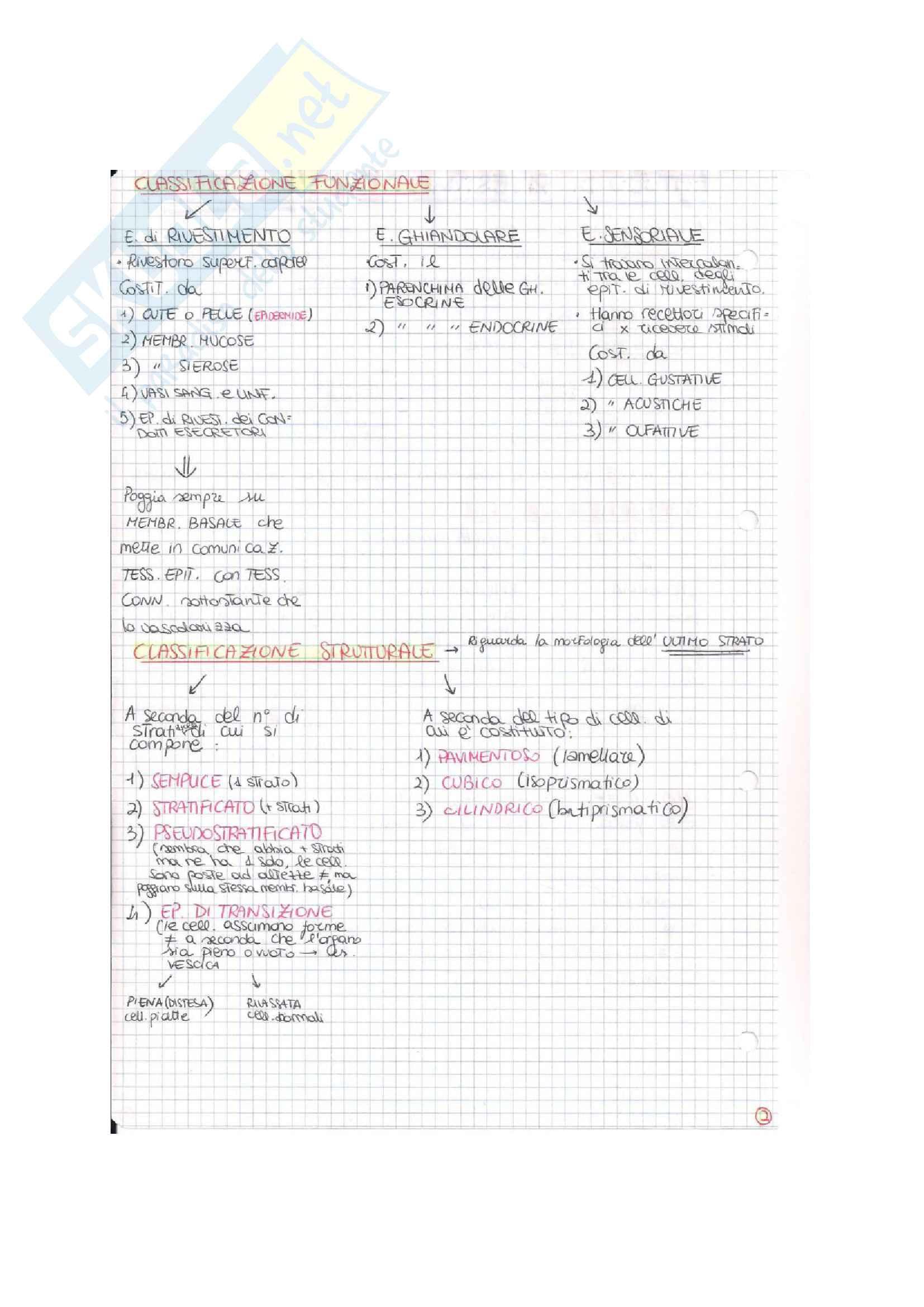 Istologia (esame istologia ed embriologia) Pag. 2