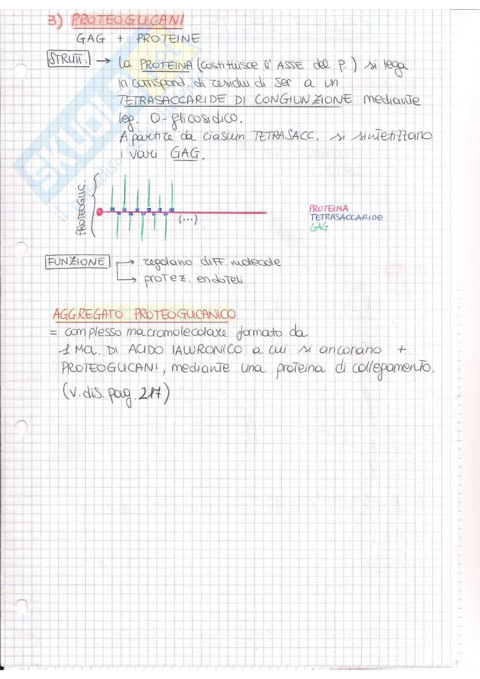 Istologia (esame istologia ed embriologia) Pag. 41