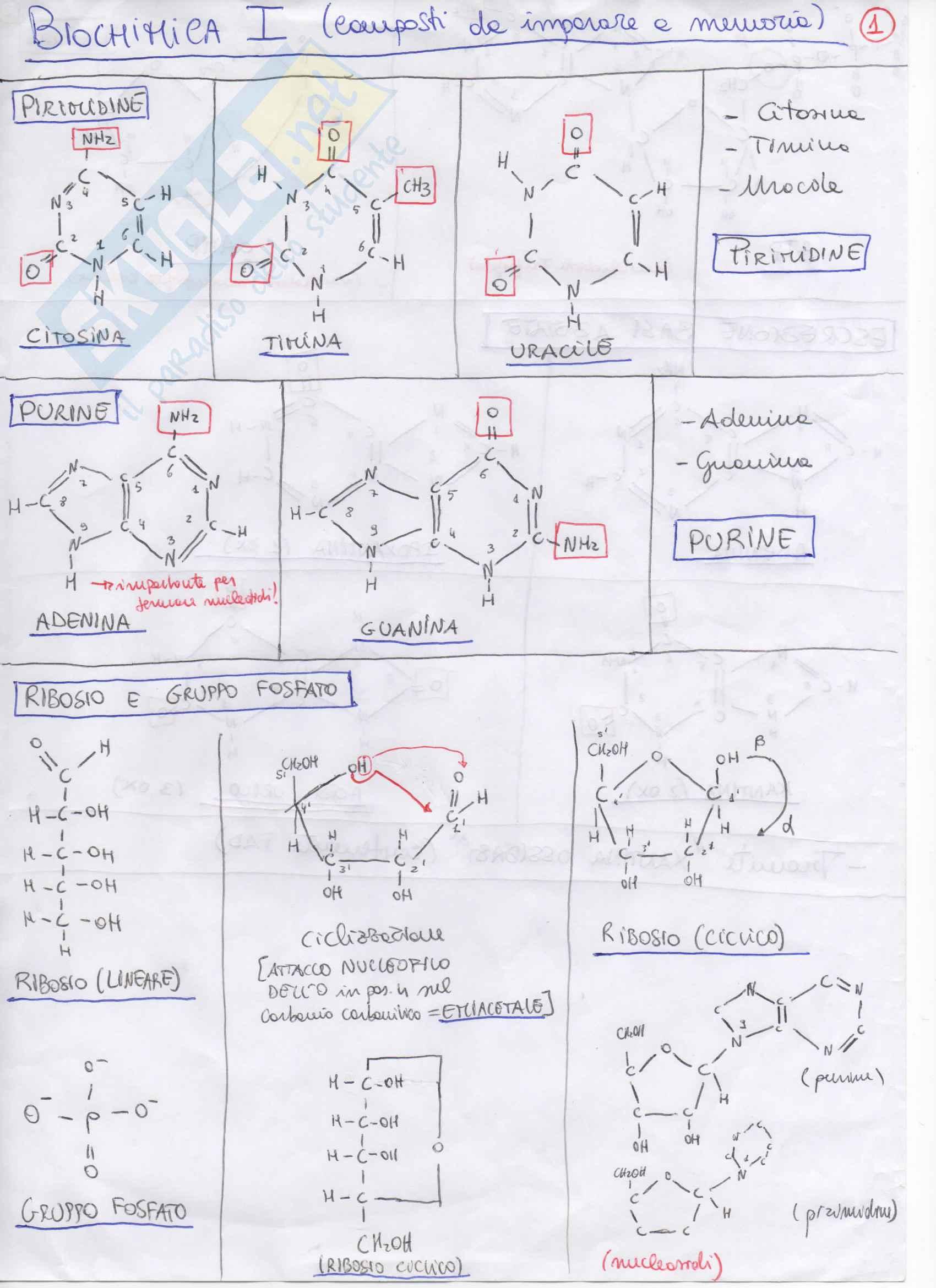 Composti Intermedi, Enzimi, strutture da imparare: biochimica 1 e 2