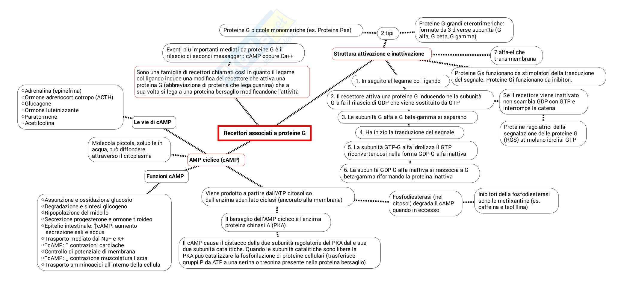 Schema su Messaggeri e recettori pdf