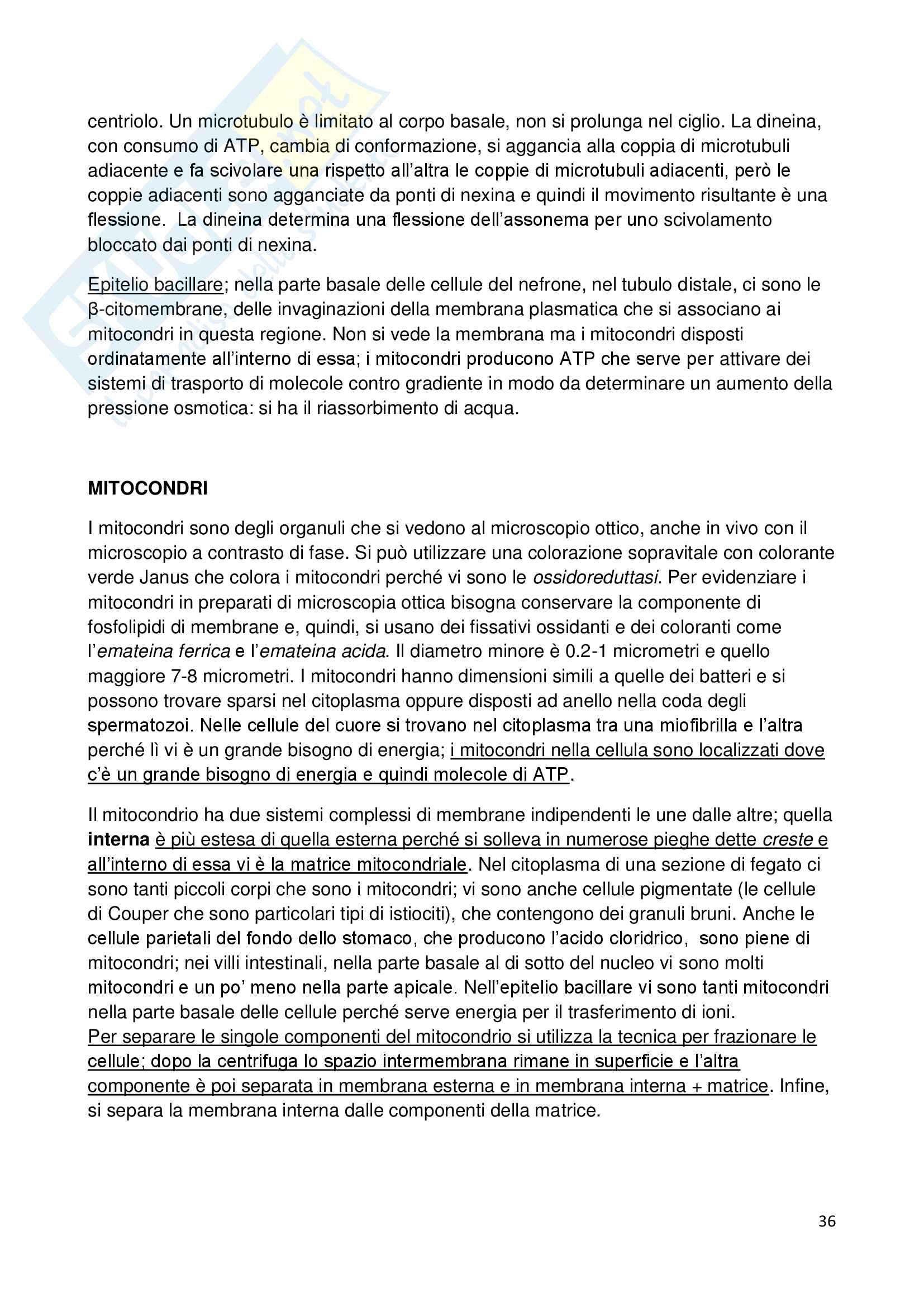 Appunti di biologia della cellula Pag. 36