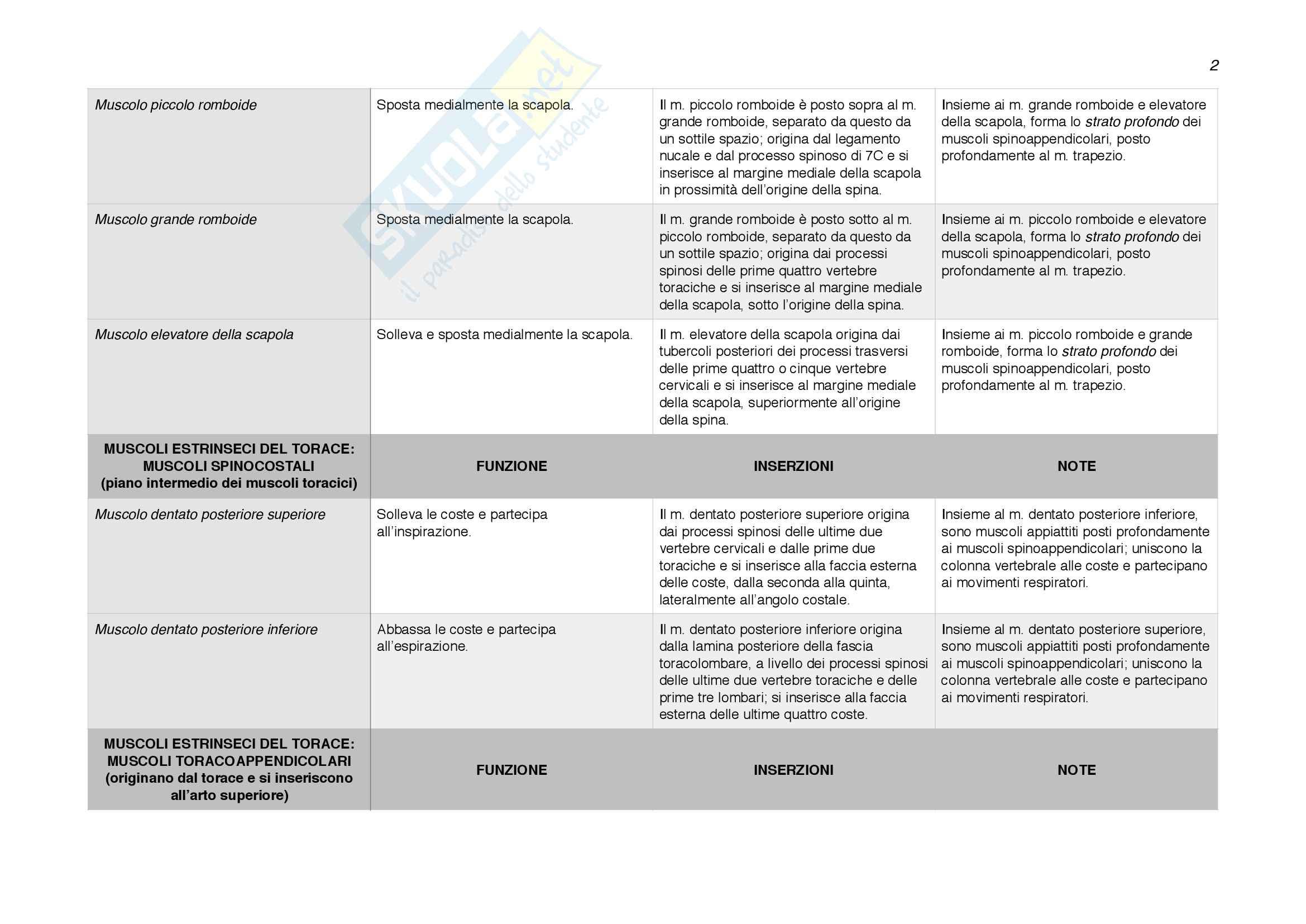 Origini e inserzioni muscolari; funzioni dei muscoli. Pag. 2