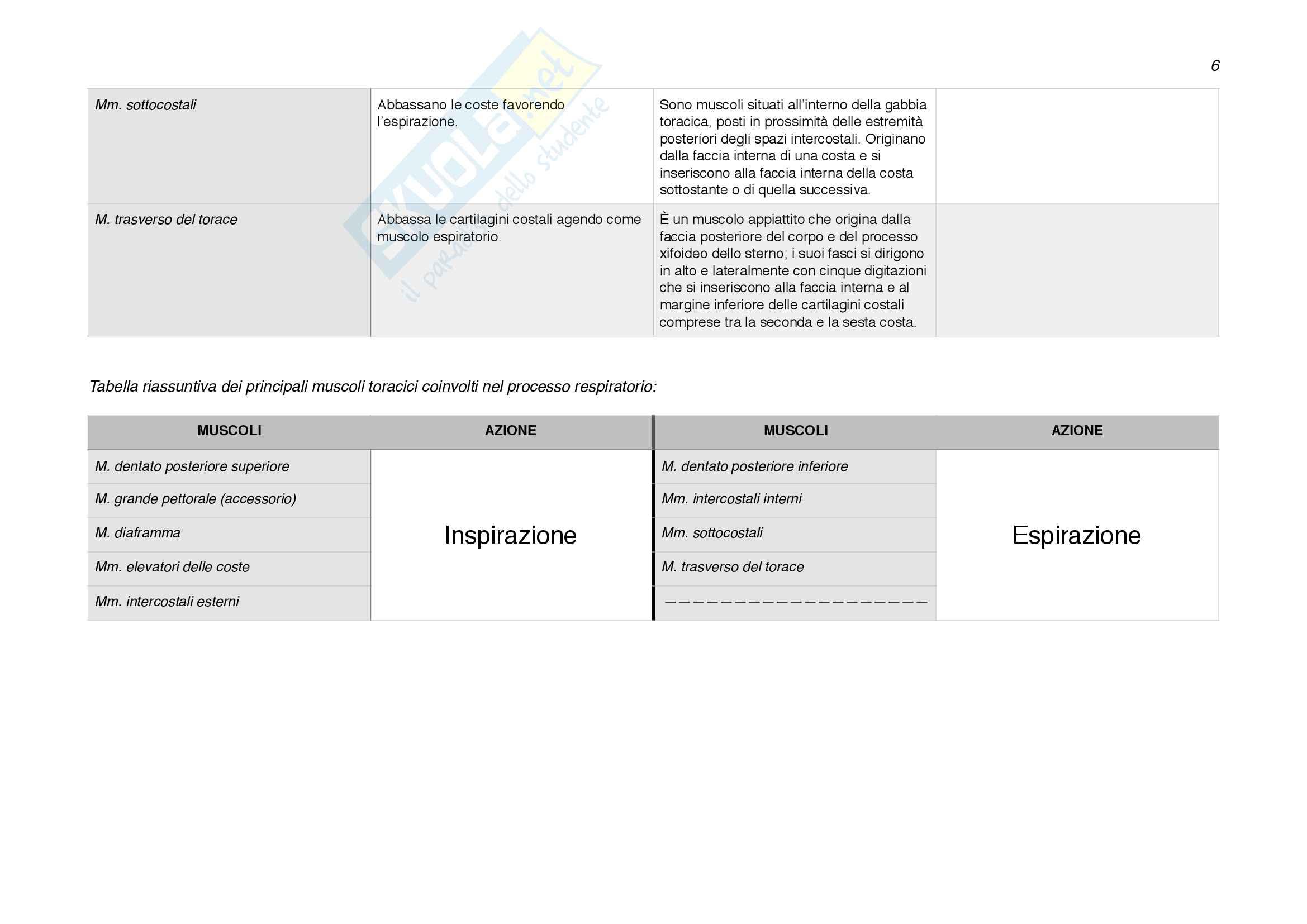 Origini e inserzioni muscolari; funzioni dei muscoli. Pag. 6