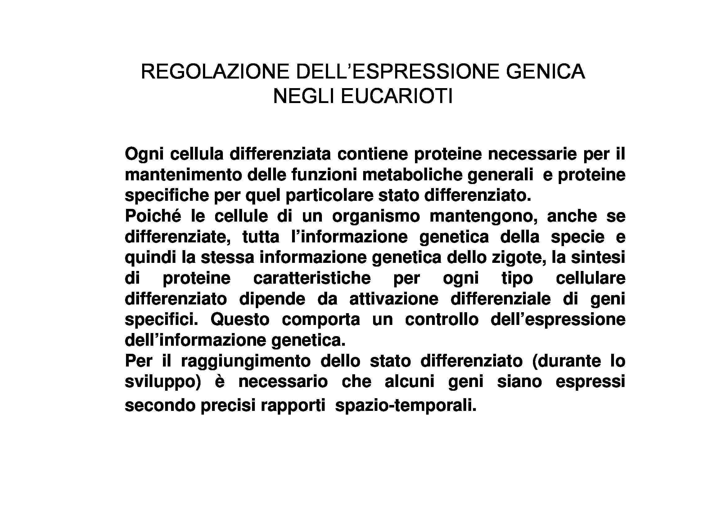 Espressione Genica negli Eucarioti - Regolazione