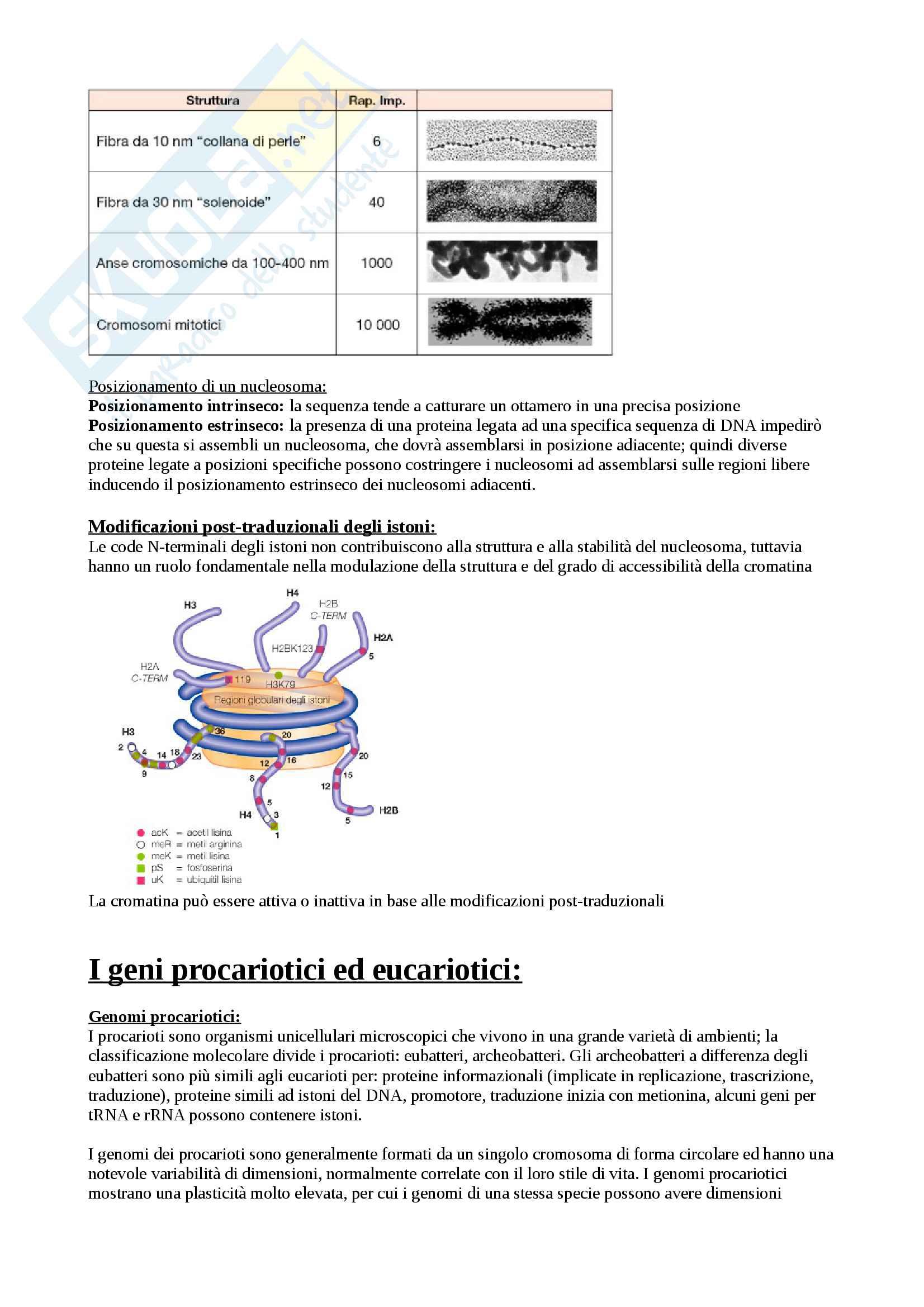 Biologia Molecolare Pag. 11