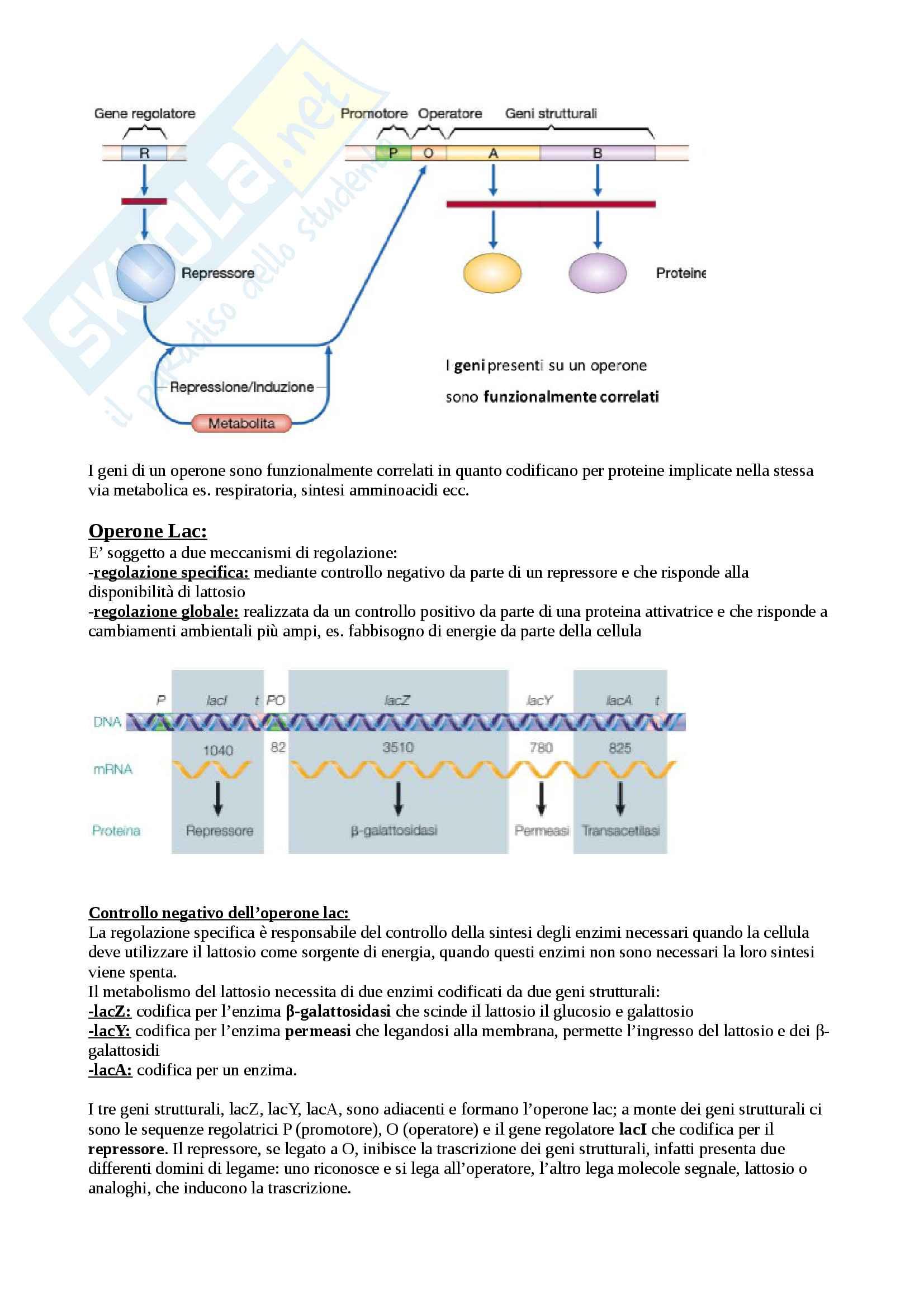 Biologia Molecolare Pag. 56