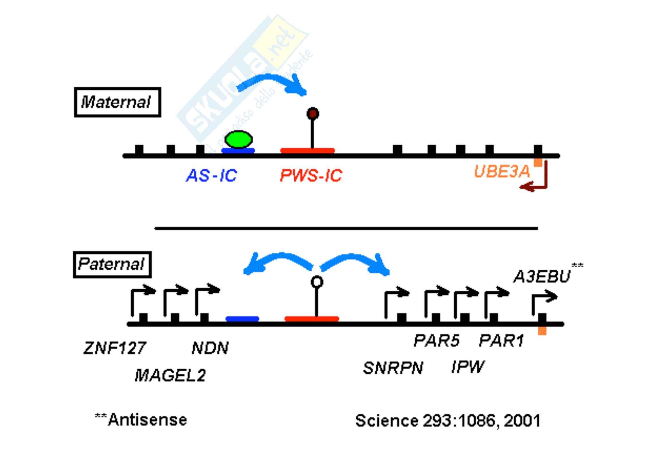 Genetica umana - mutazioni monogeniche - Appunti Pag. 76