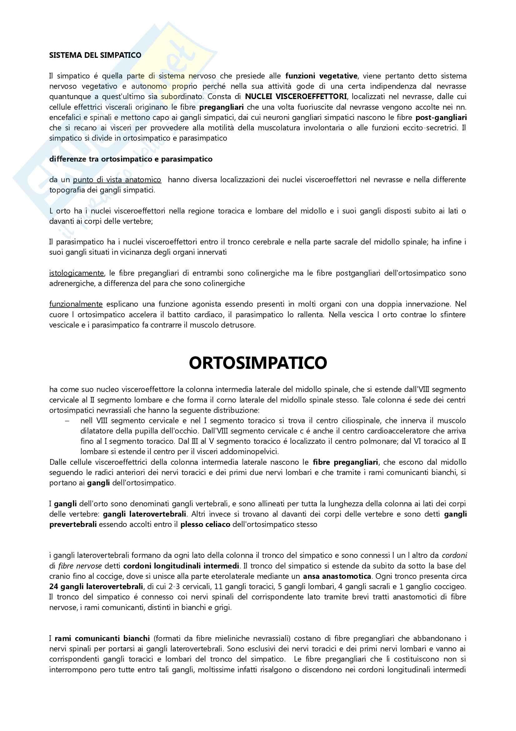 appunto S. Zecchi Anatomia III