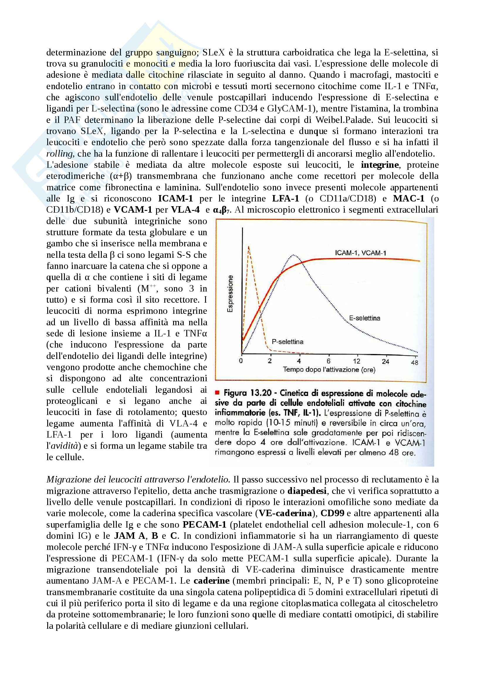 Patologia generale I - infiammazione acuta e cronica Pag. 6