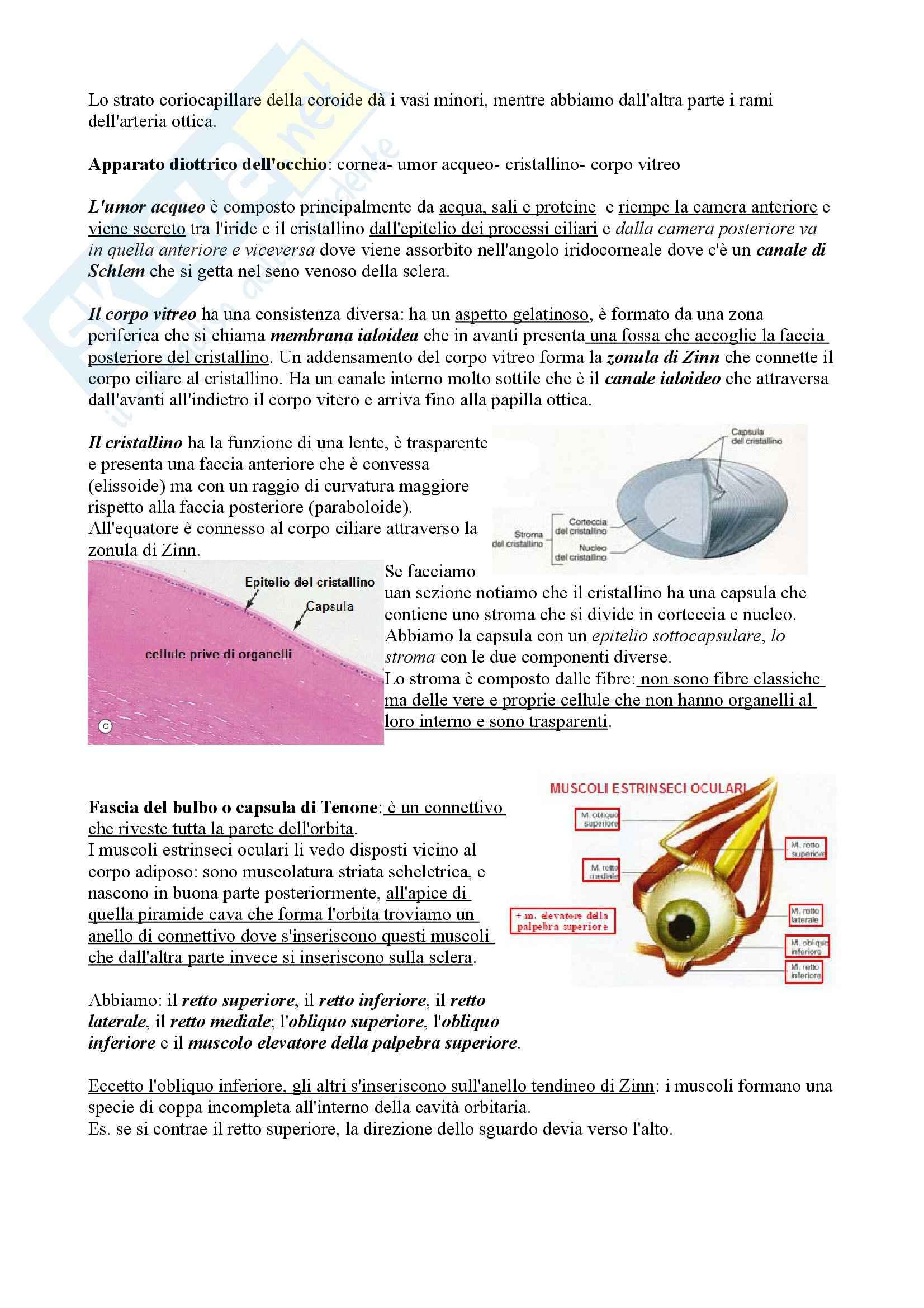 Occhio e  visione, Anatomia Pag. 6