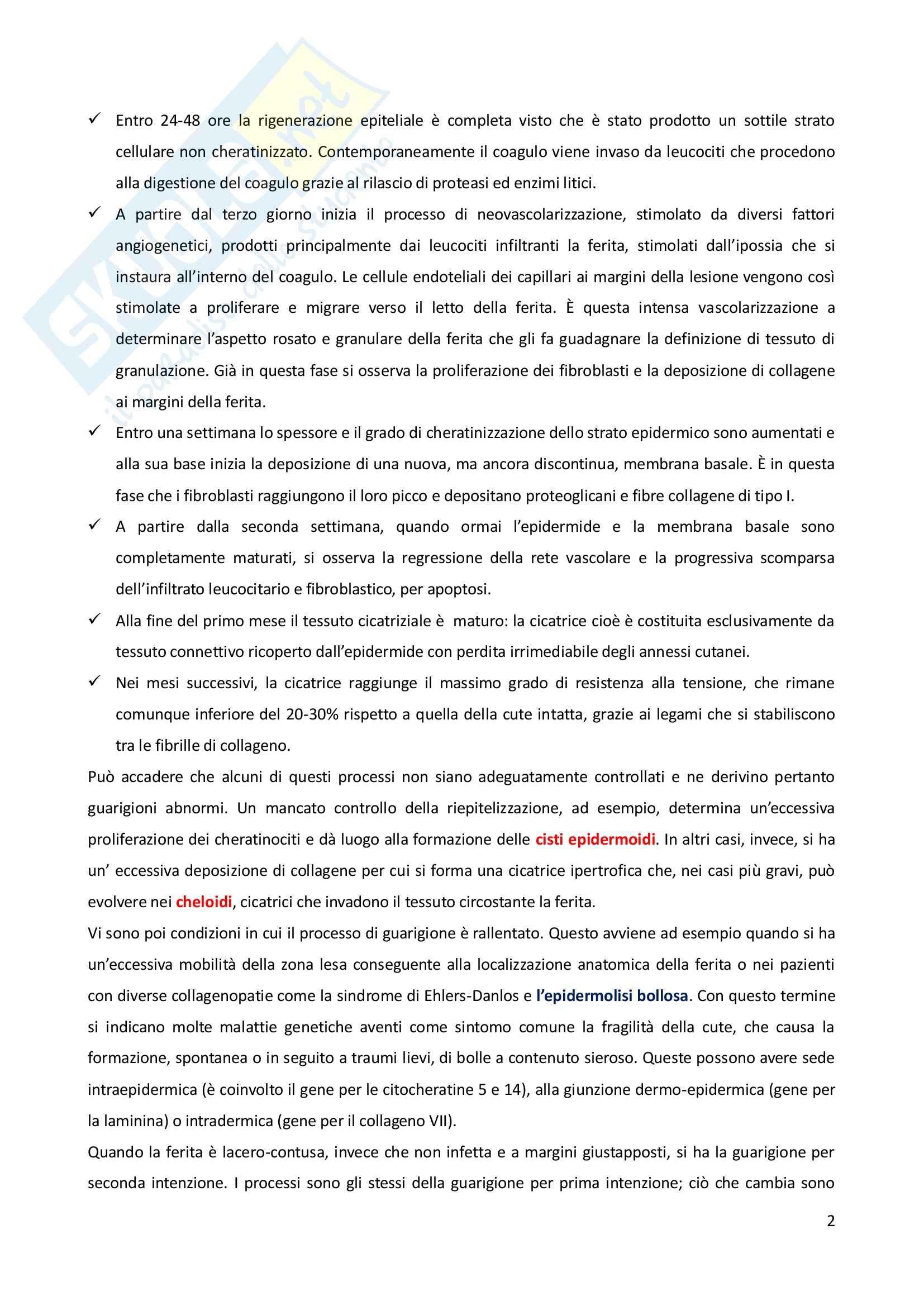 Biologia e genetica - il processo riparativo Pag. 2