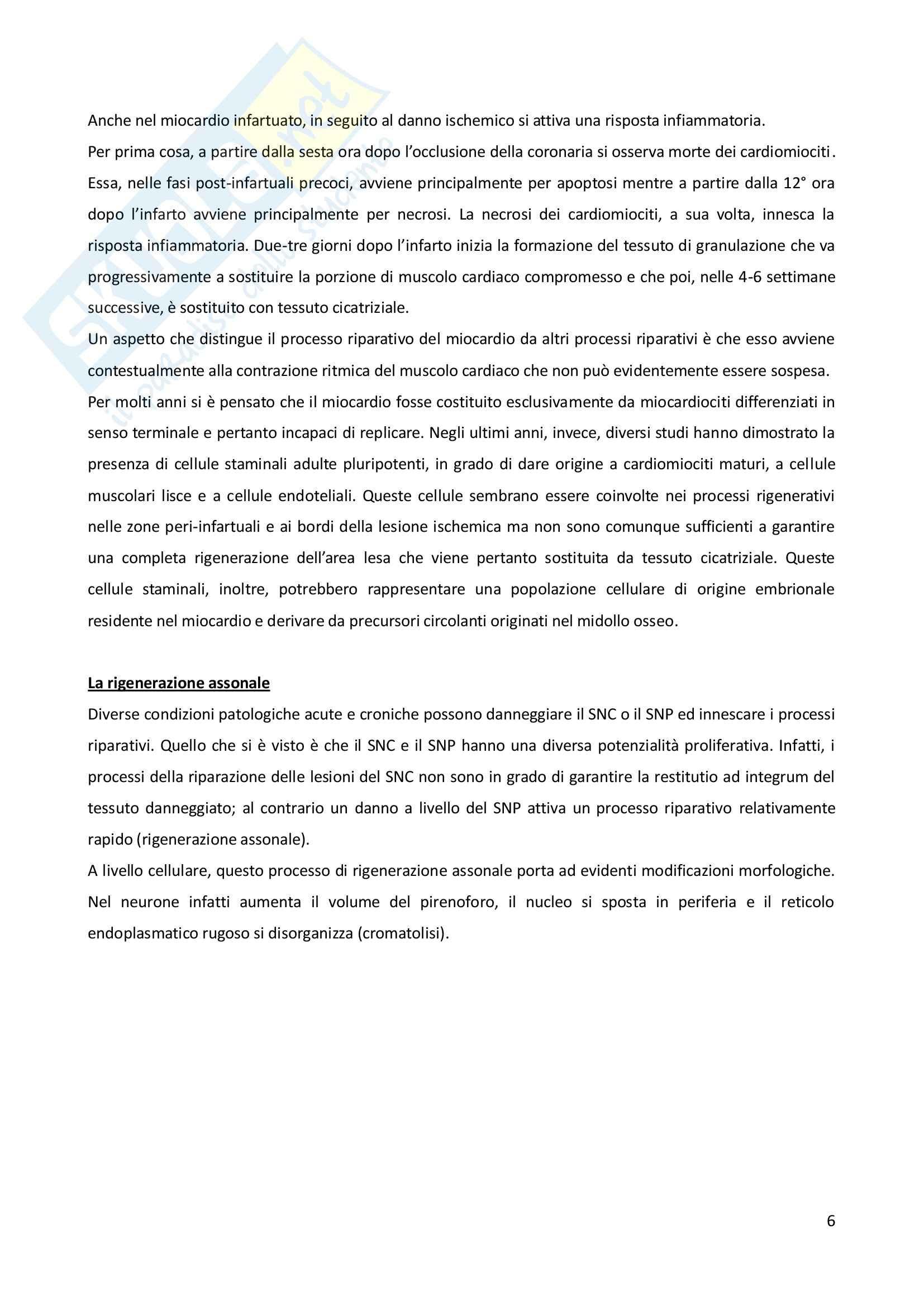 Biologia e genetica - il processo riparativo Pag. 6