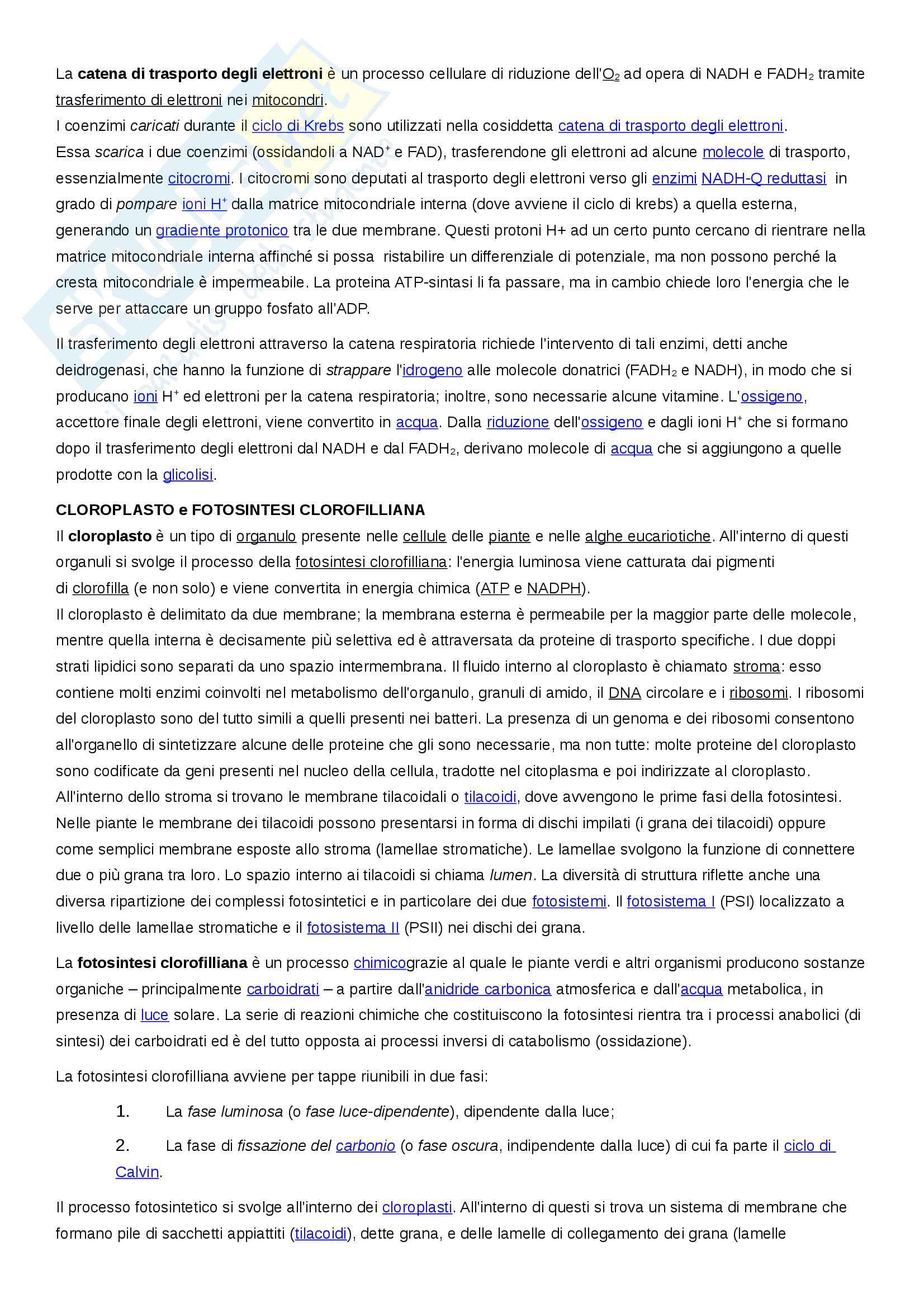 Esame Citologia (Scienze biologiche) prof. Canapa Pag. 11