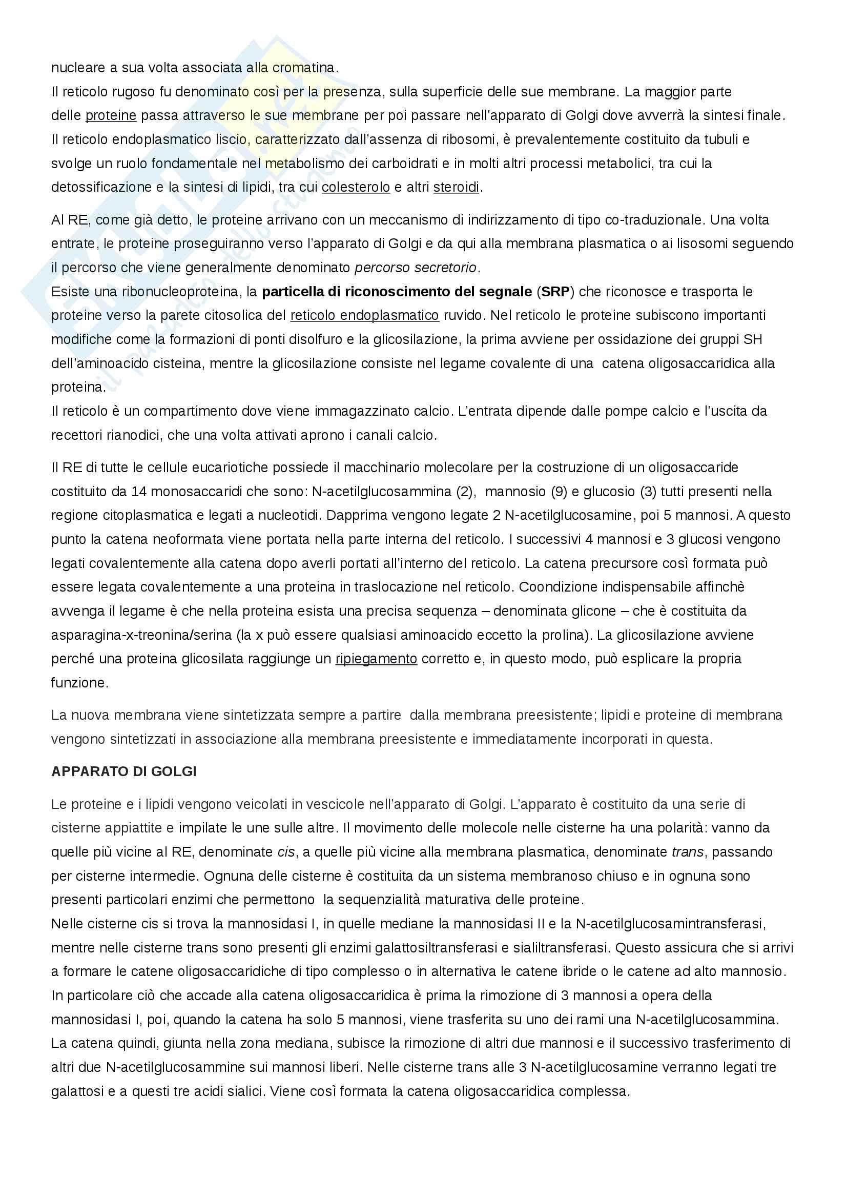 Esame Citologia (Scienze biologiche) prof. Canapa Pag. 6