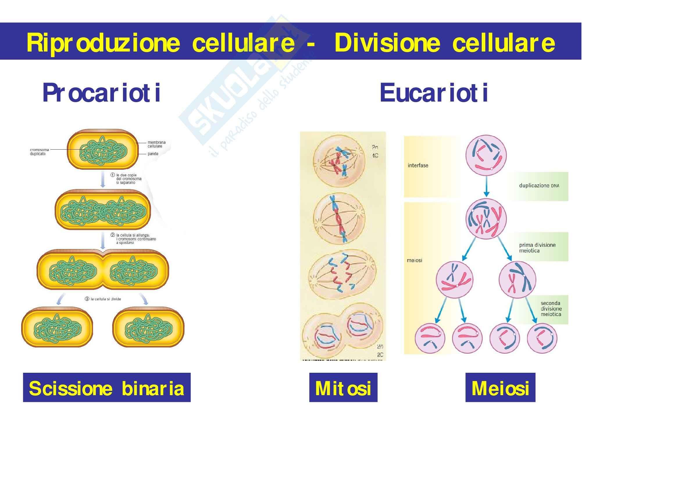 Biologia – Lezione 8 (2° parte) - Slides