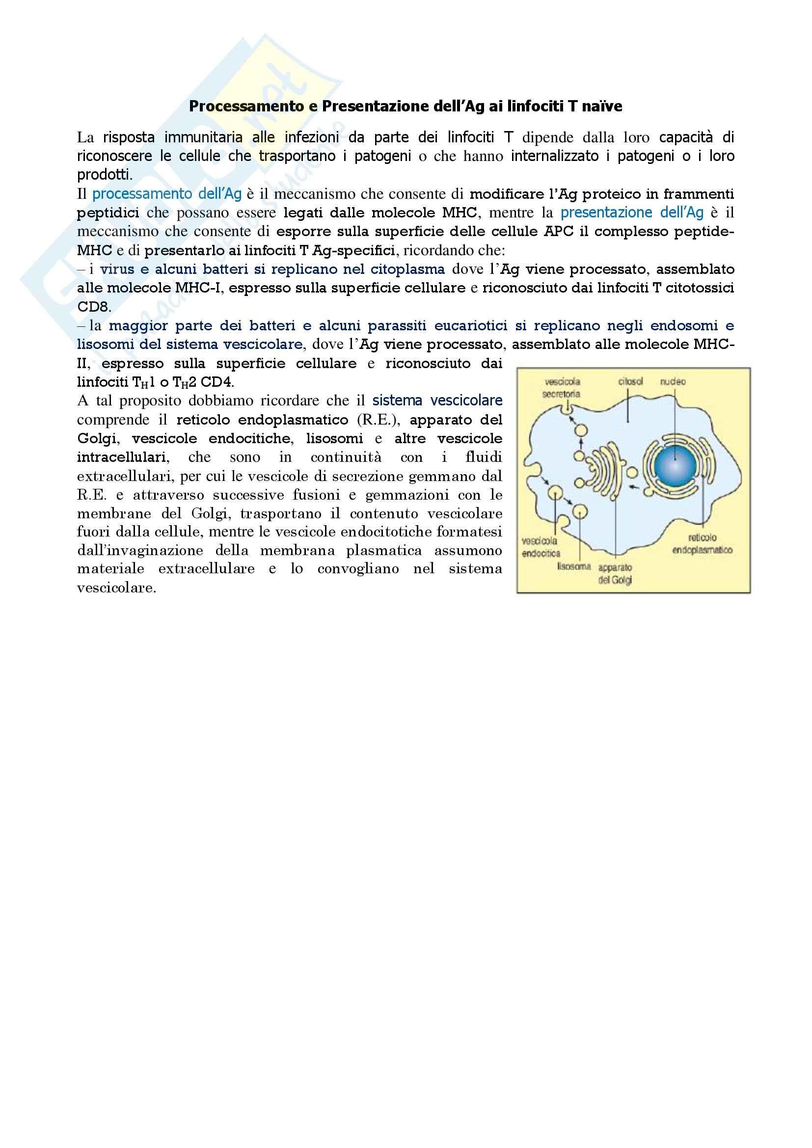 Immunologia - processamento e presentazione dell'Ag