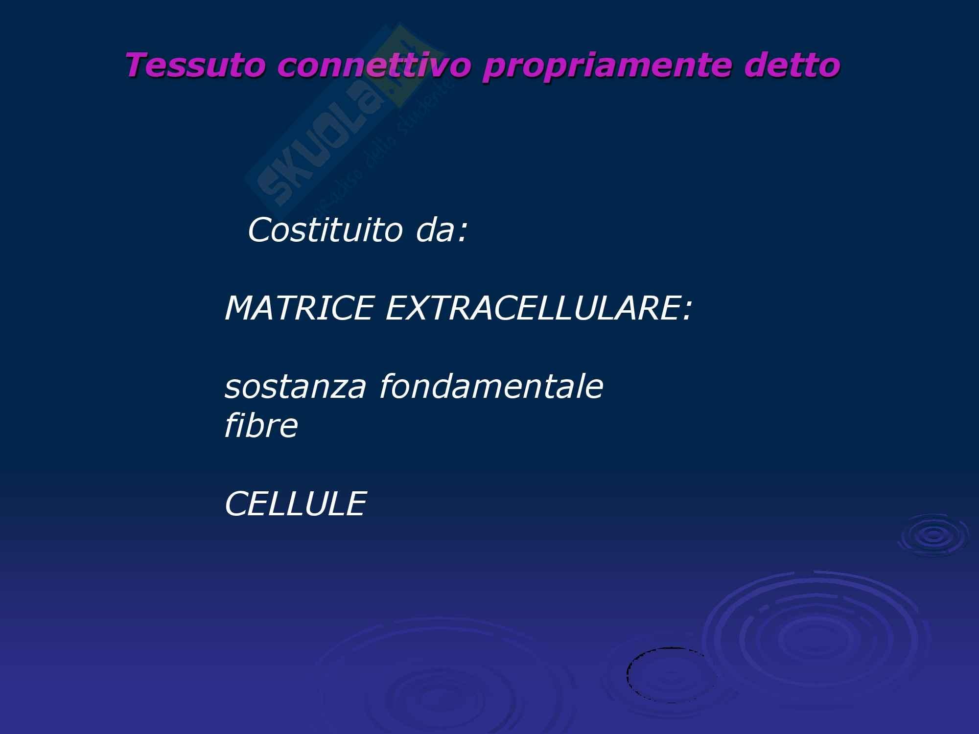 Tessuto connettivo Pag. 2