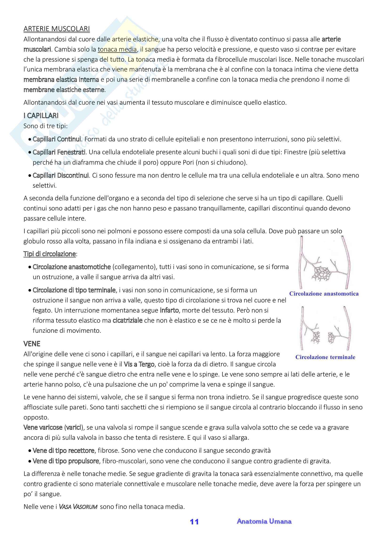 Anatomia umana, Appunti, Prof.ssa Ferretti Pag. 11