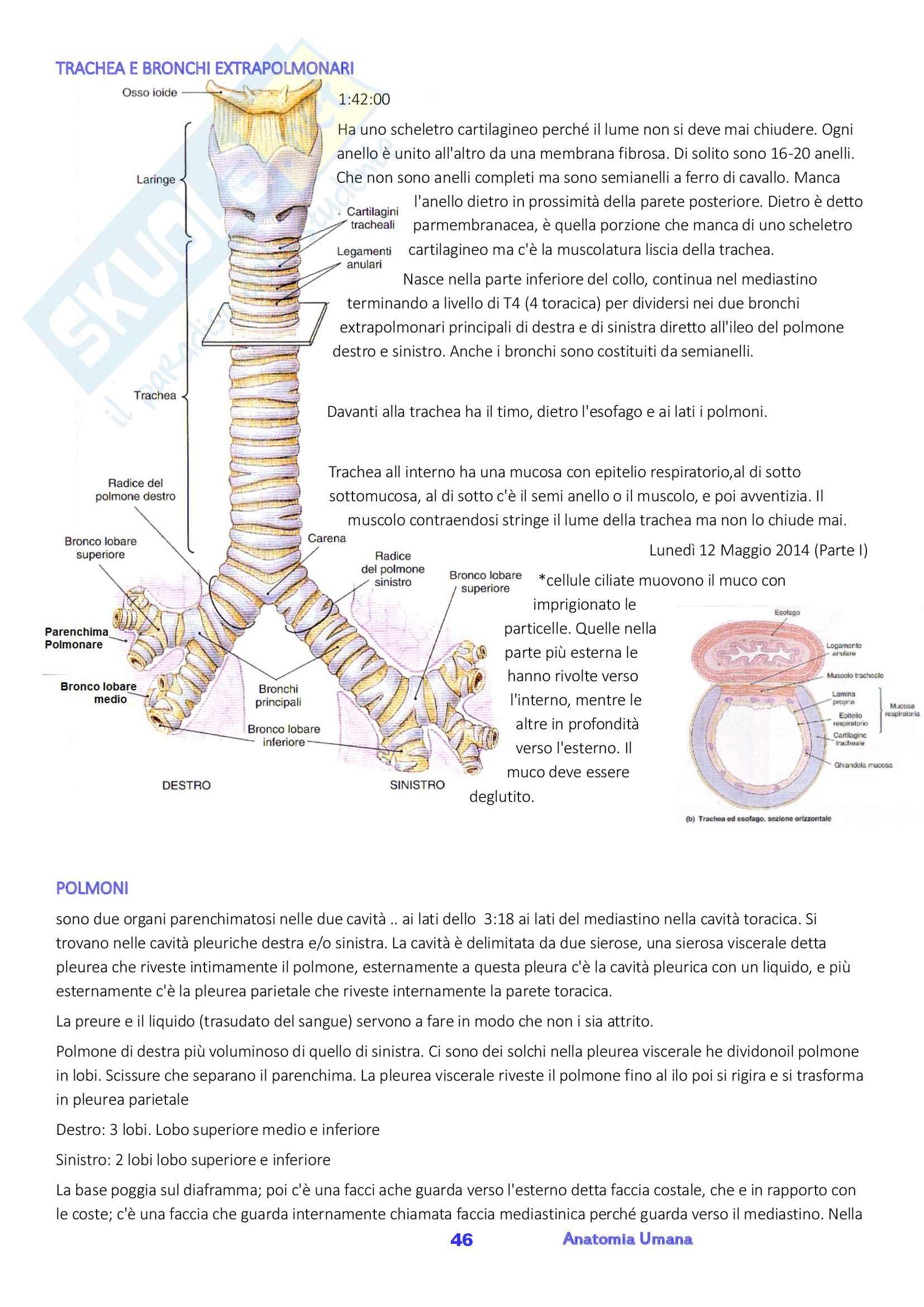 Anatomia umana, Appunti, Prof.ssa Ferretti Pag. 46