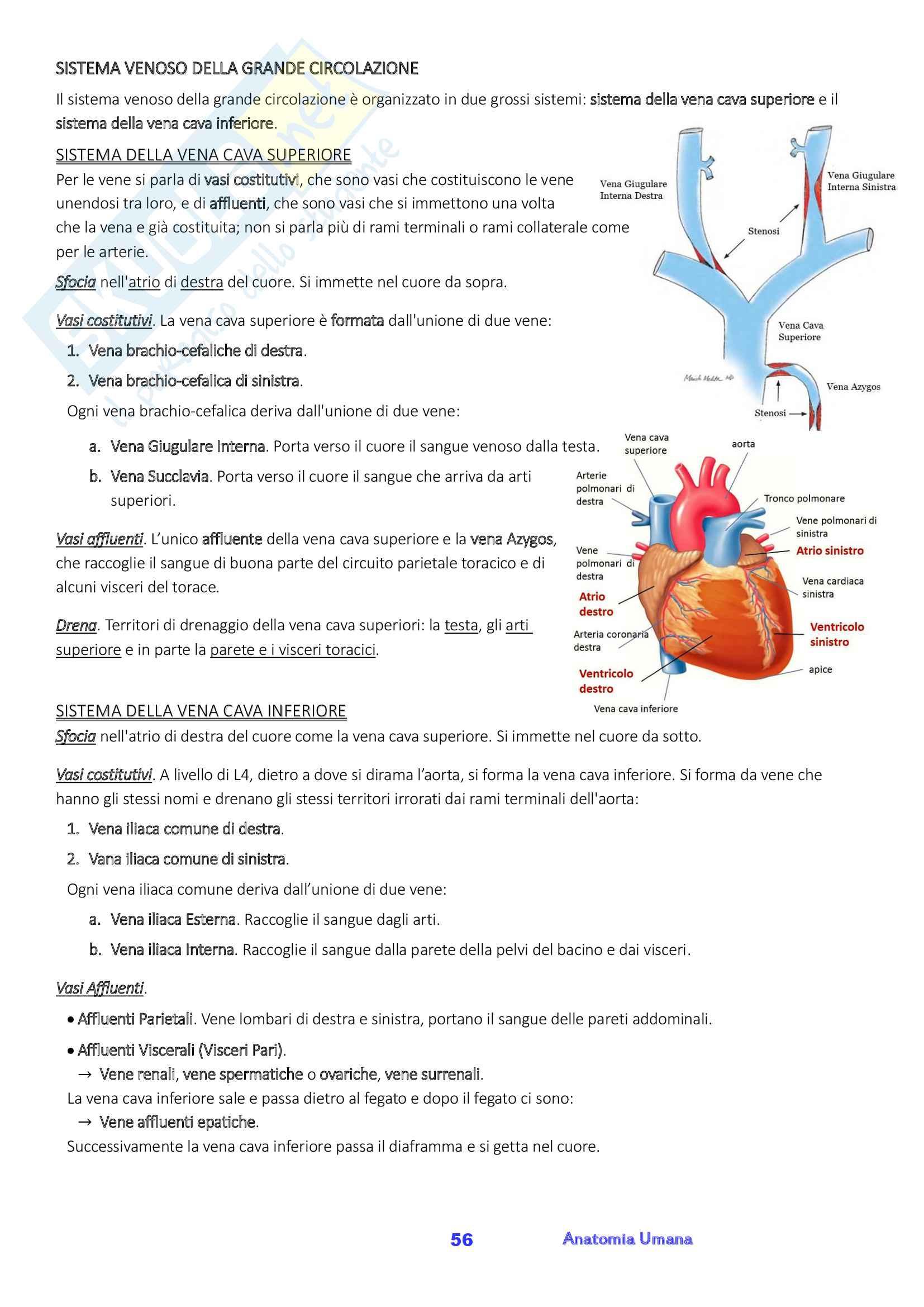 Anatomia umana, Appunti, Prof.ssa Ferretti Pag. 56