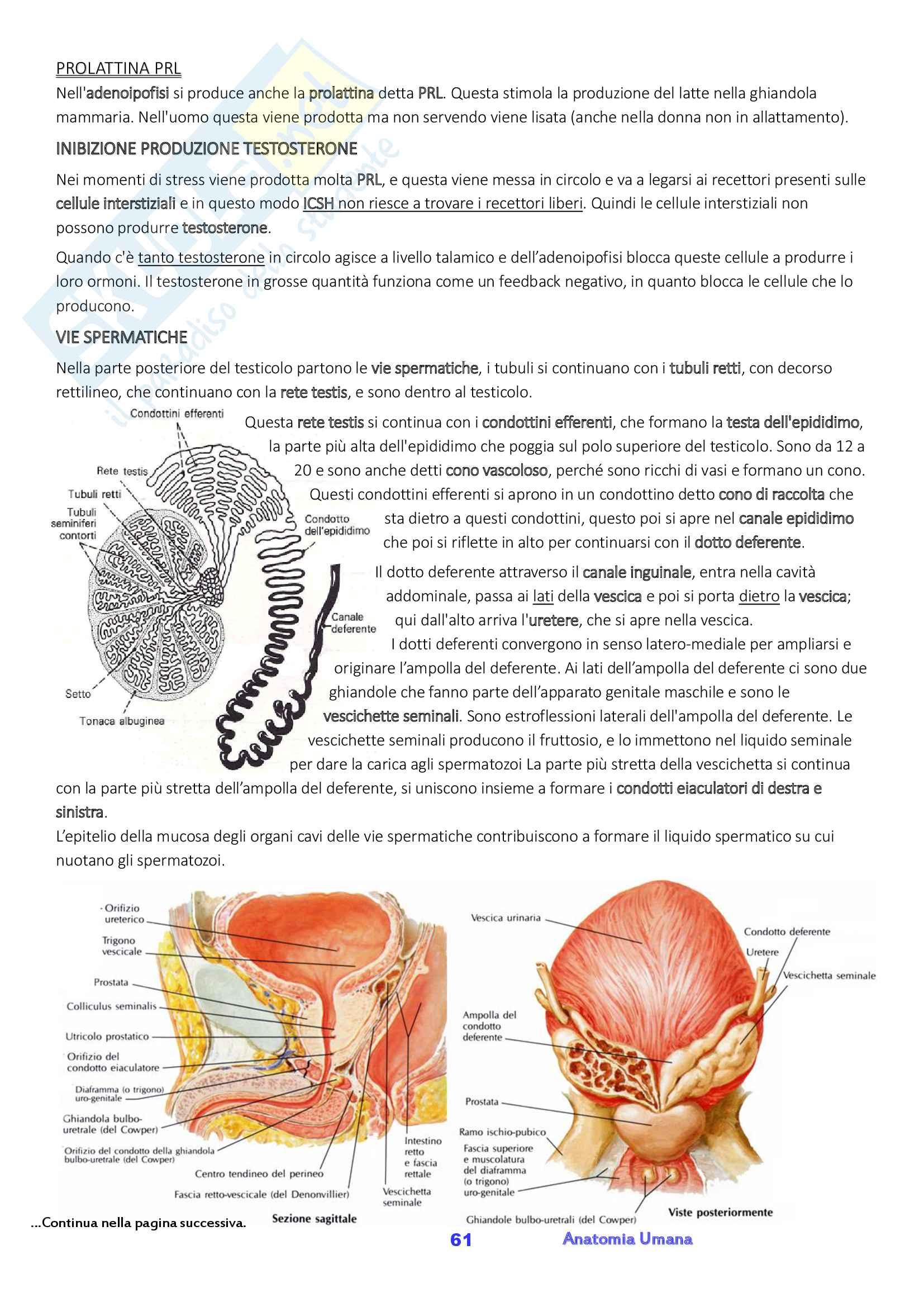 Anatomia umana, Appunti, Prof.ssa Ferretti Pag. 61