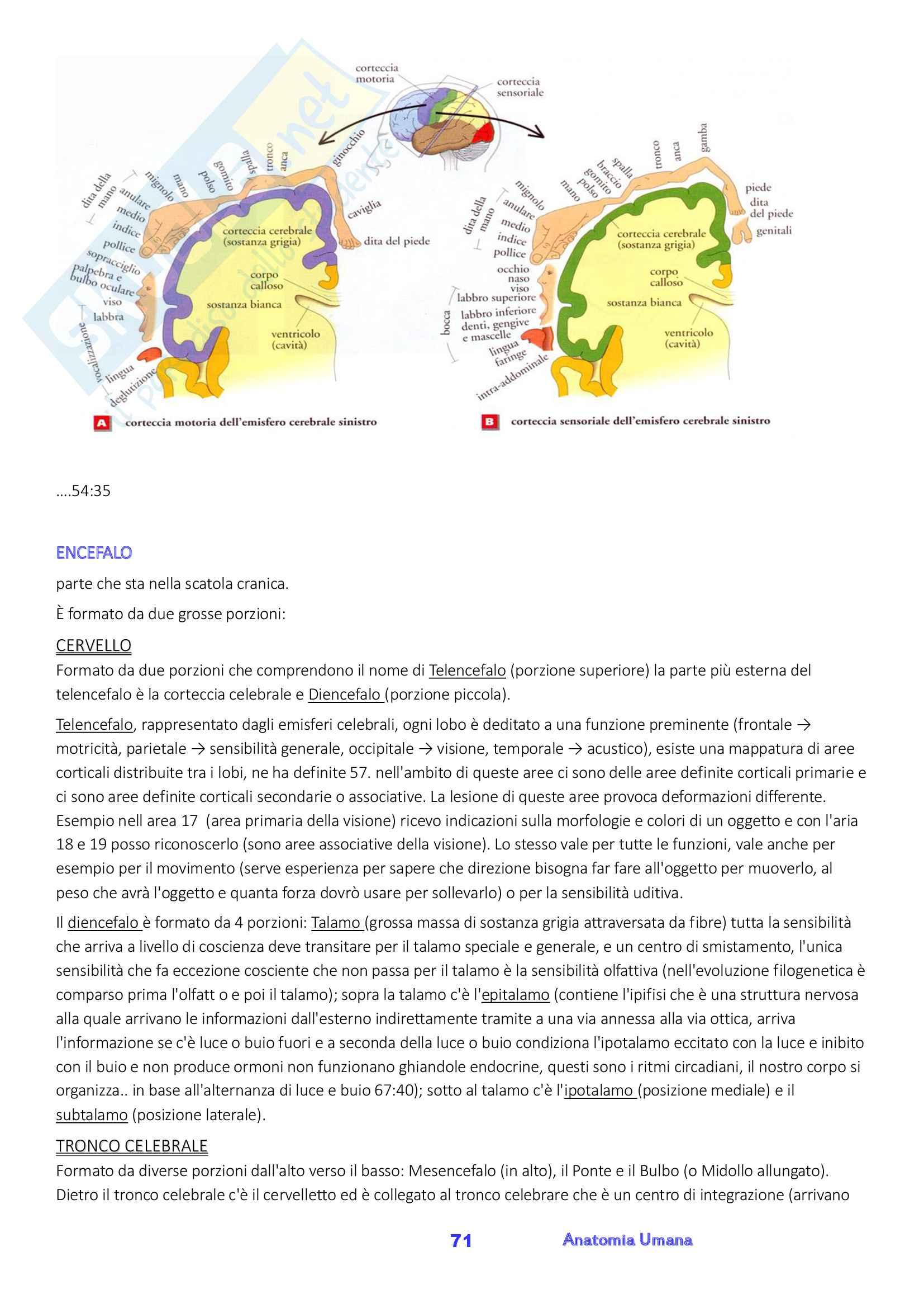 Anatomia umana, Appunti, Prof.ssa Ferretti Pag. 71