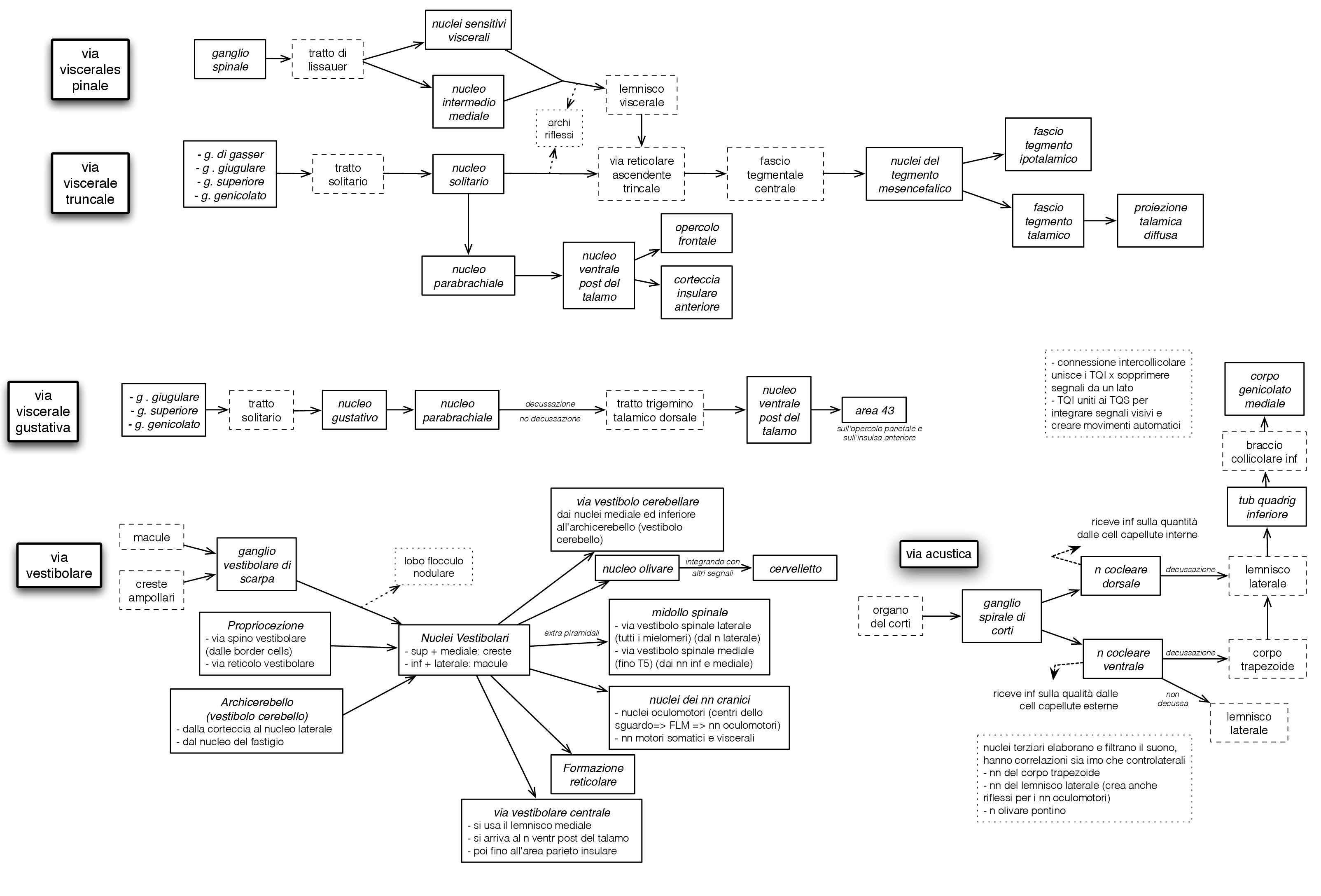 Anatomia umana - schema completo Neuroanatomia Pag. 2