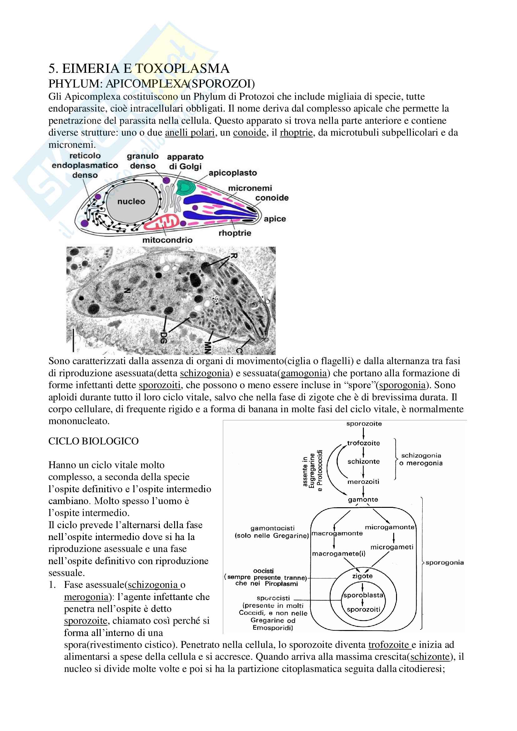 Parassitologia Pag. 26