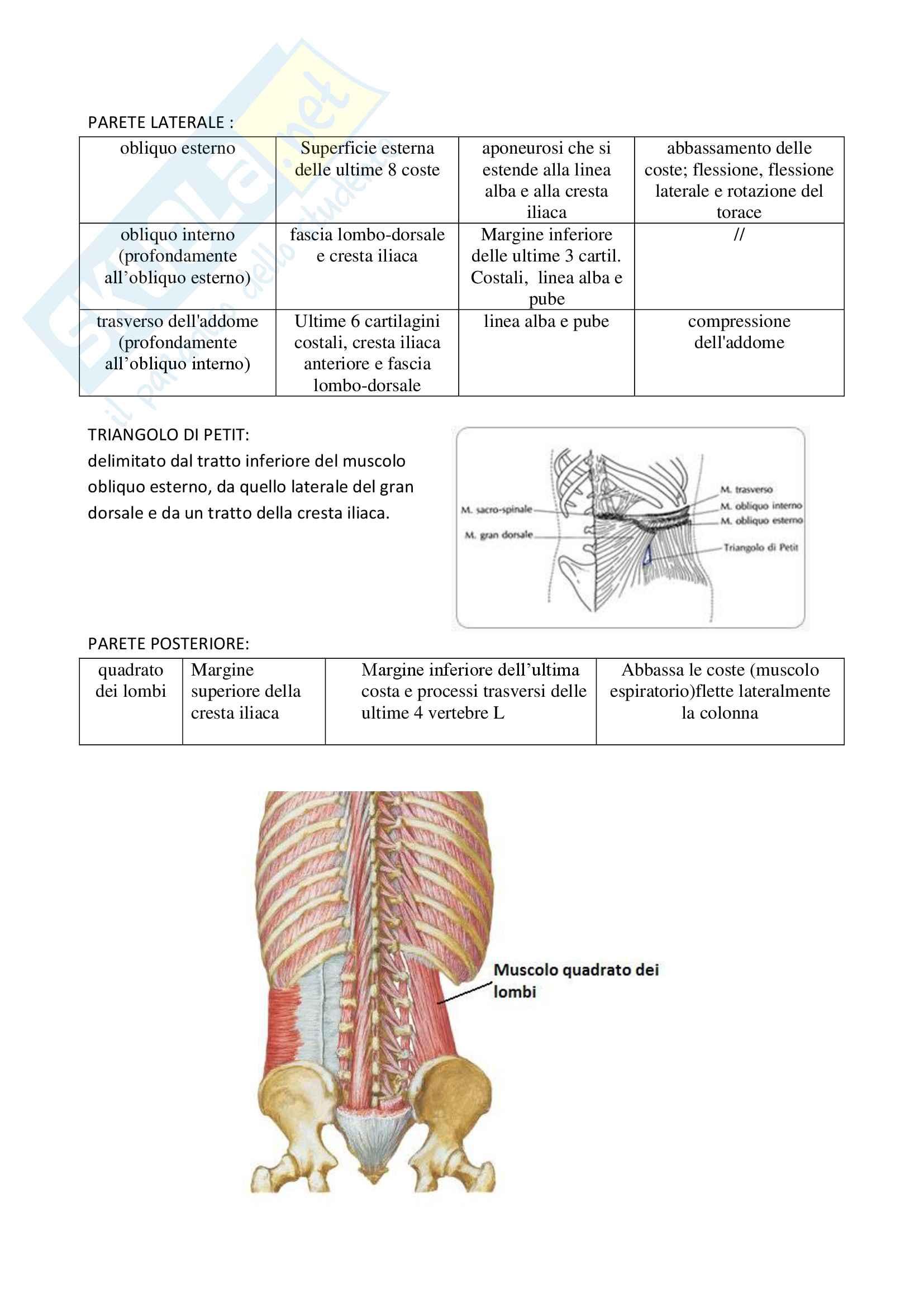 Anatomia : Articolazioni e muscoli Pag. 21