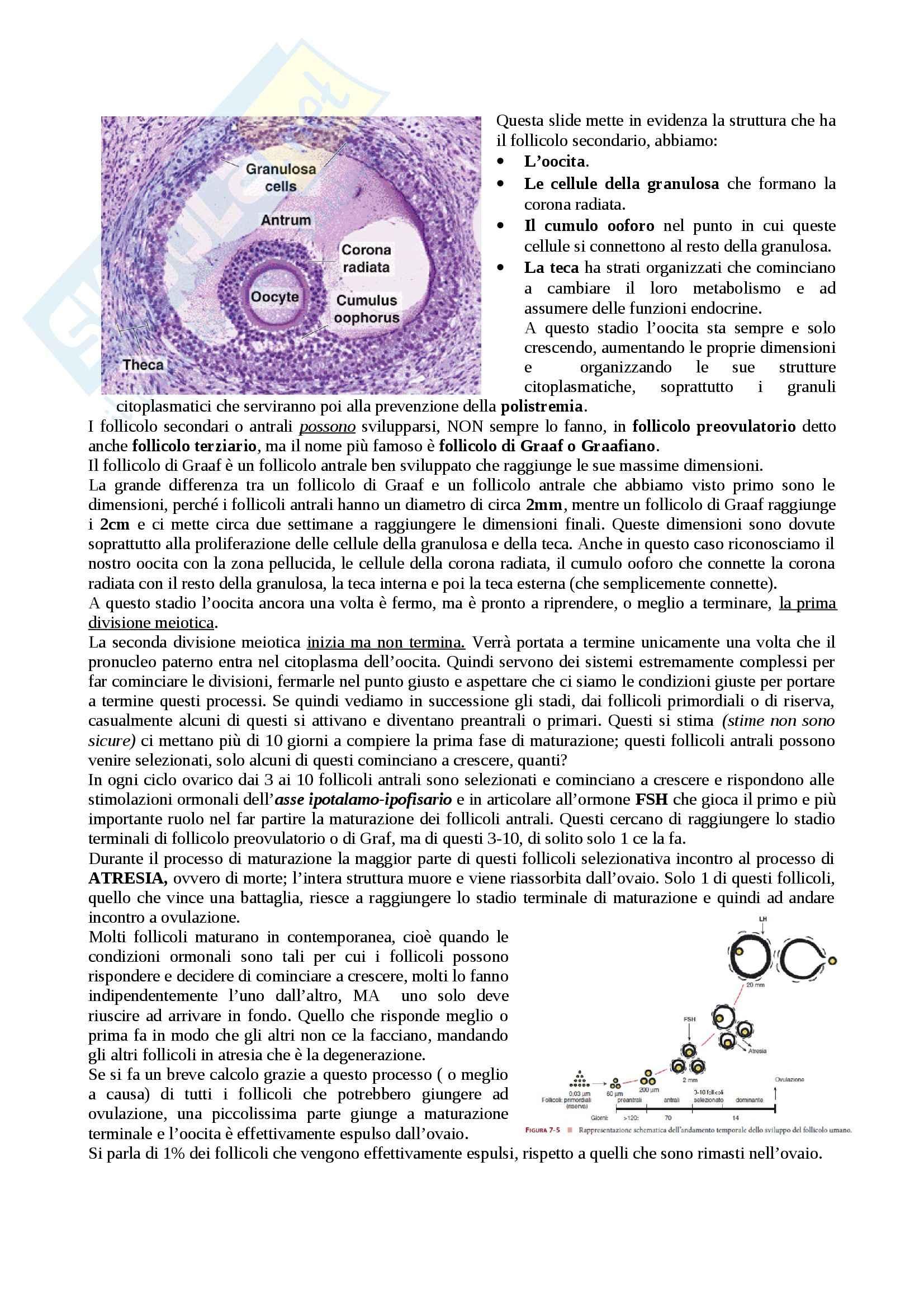 Ciclo follicolare e Fecondazione, Embriologia Pag. 2