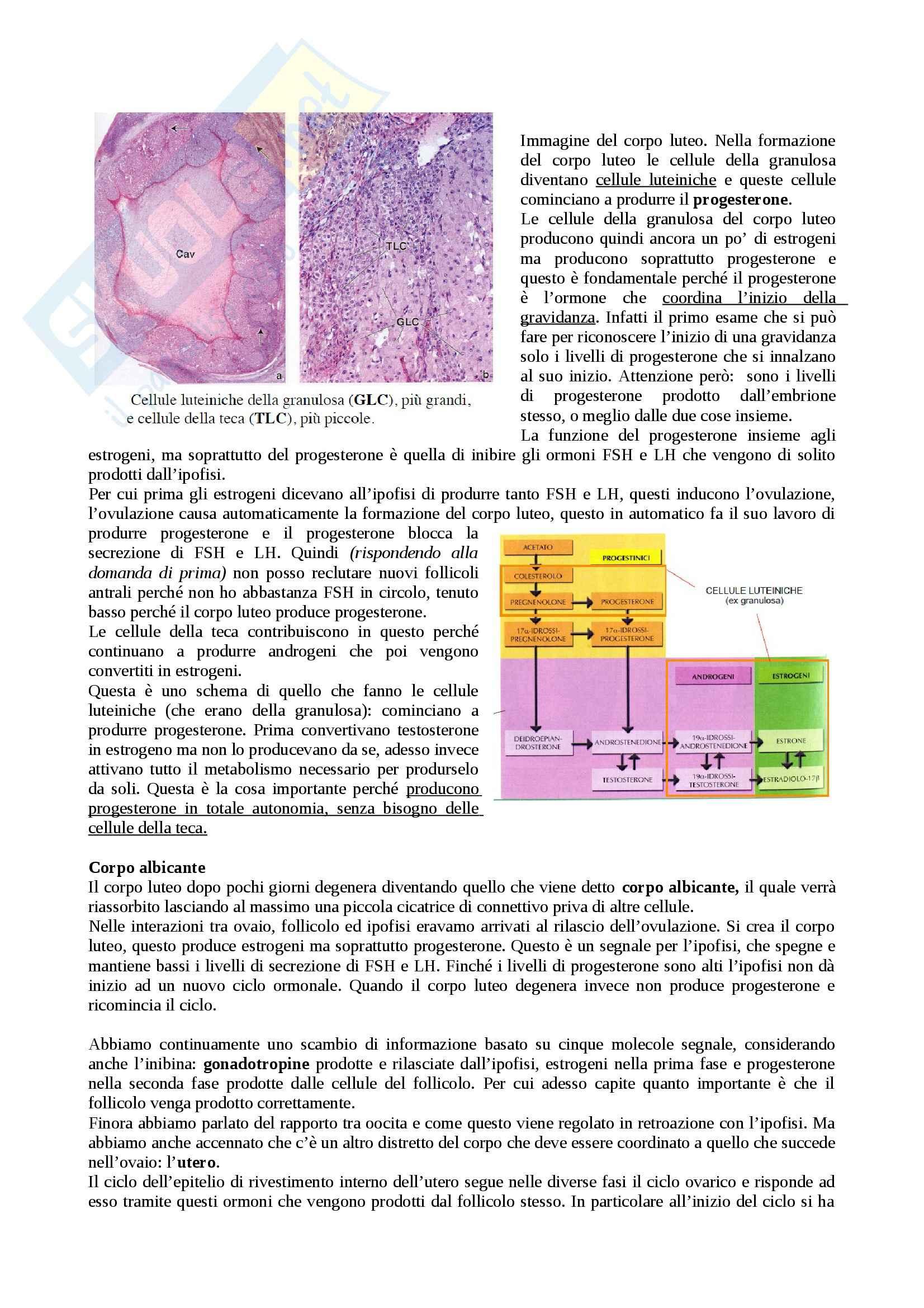 Ciclo follicolare e Fecondazione, Embriologia Pag. 6