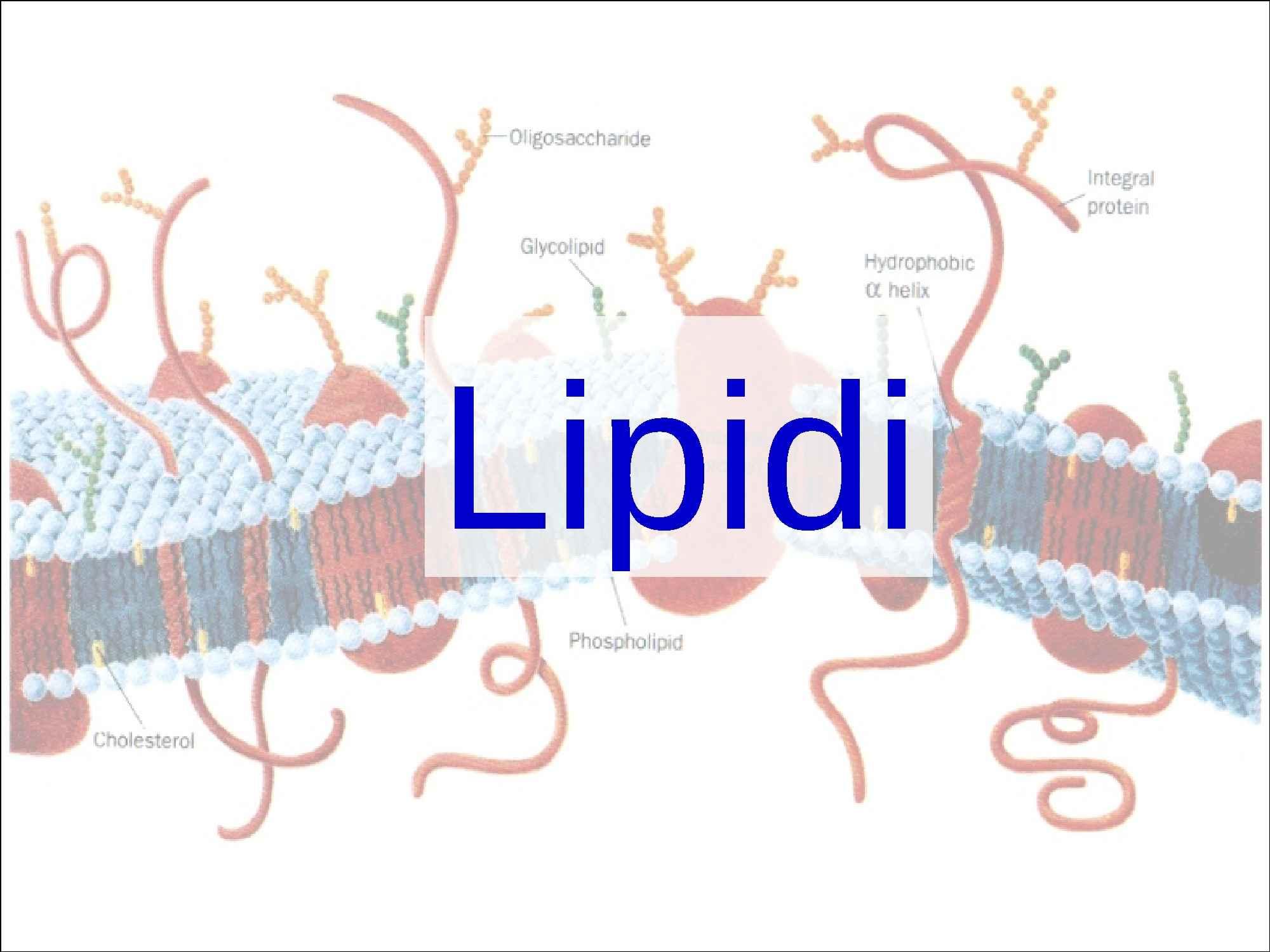 Lipidi - Struttura, classificazione e caratteristiche