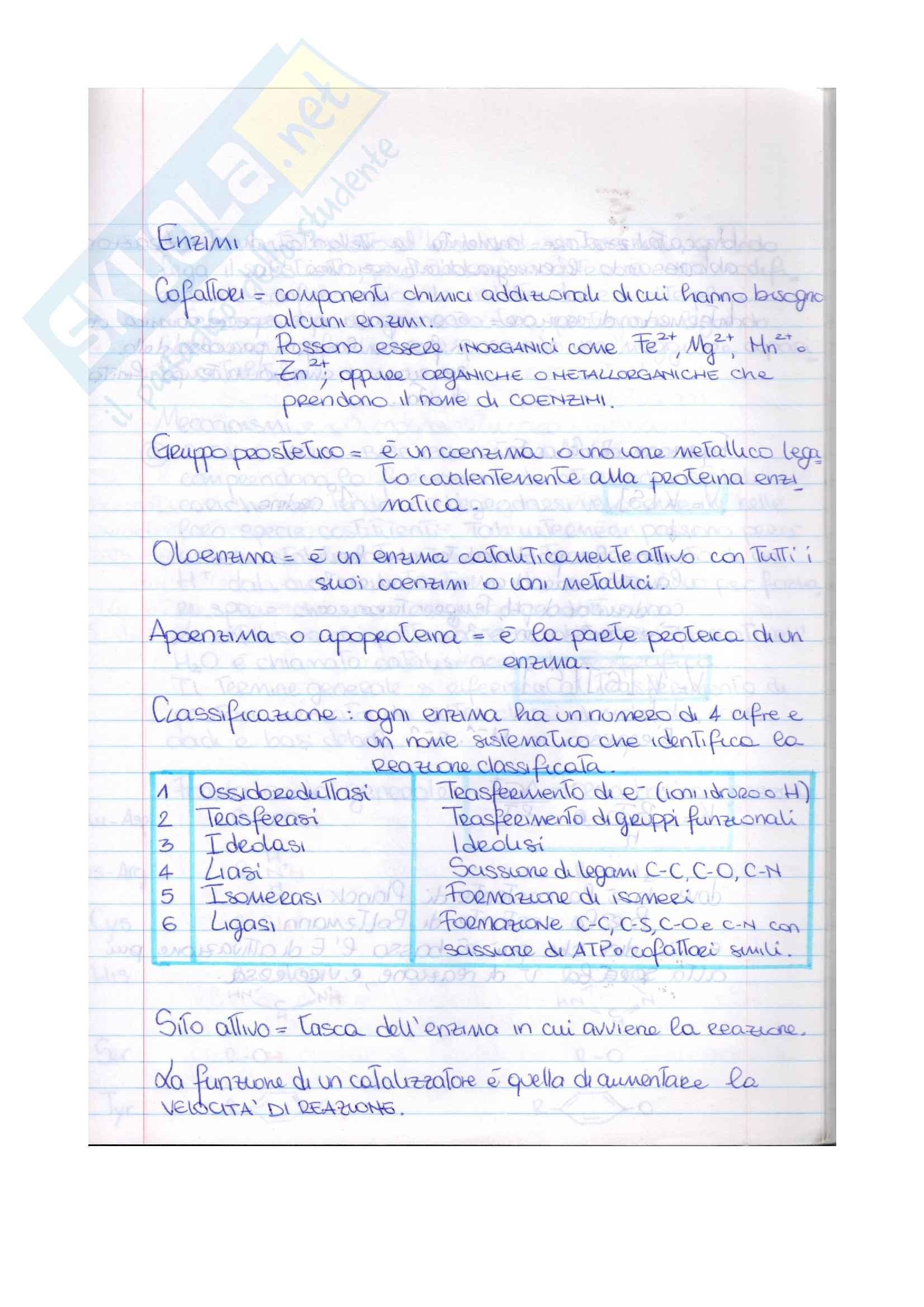 Esame di Biochimica (parte1) Pag. 11