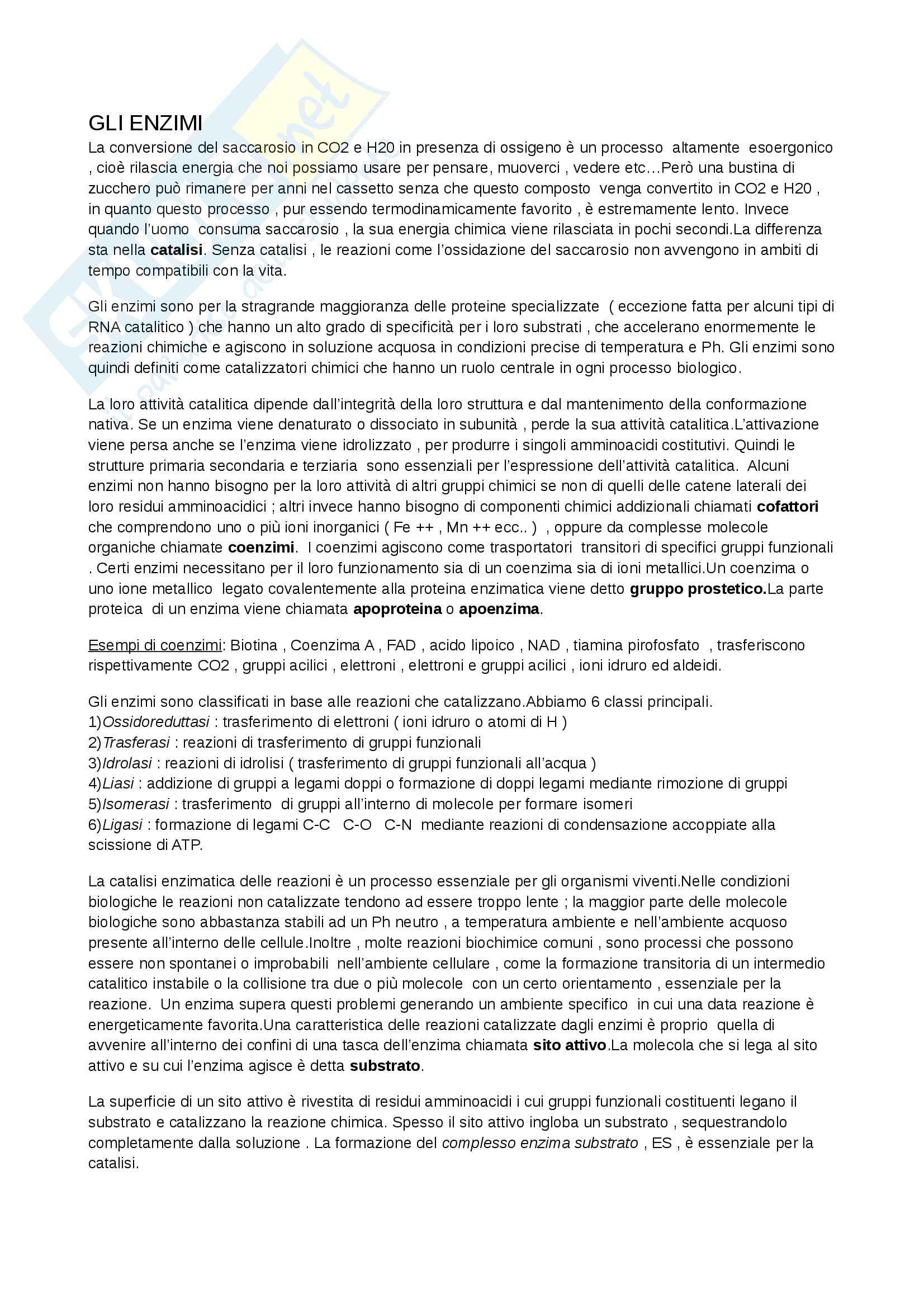 Riassunto esame Biochimica, prof. Marcocci, libro consigliato Principi di biochimica, Lehninger