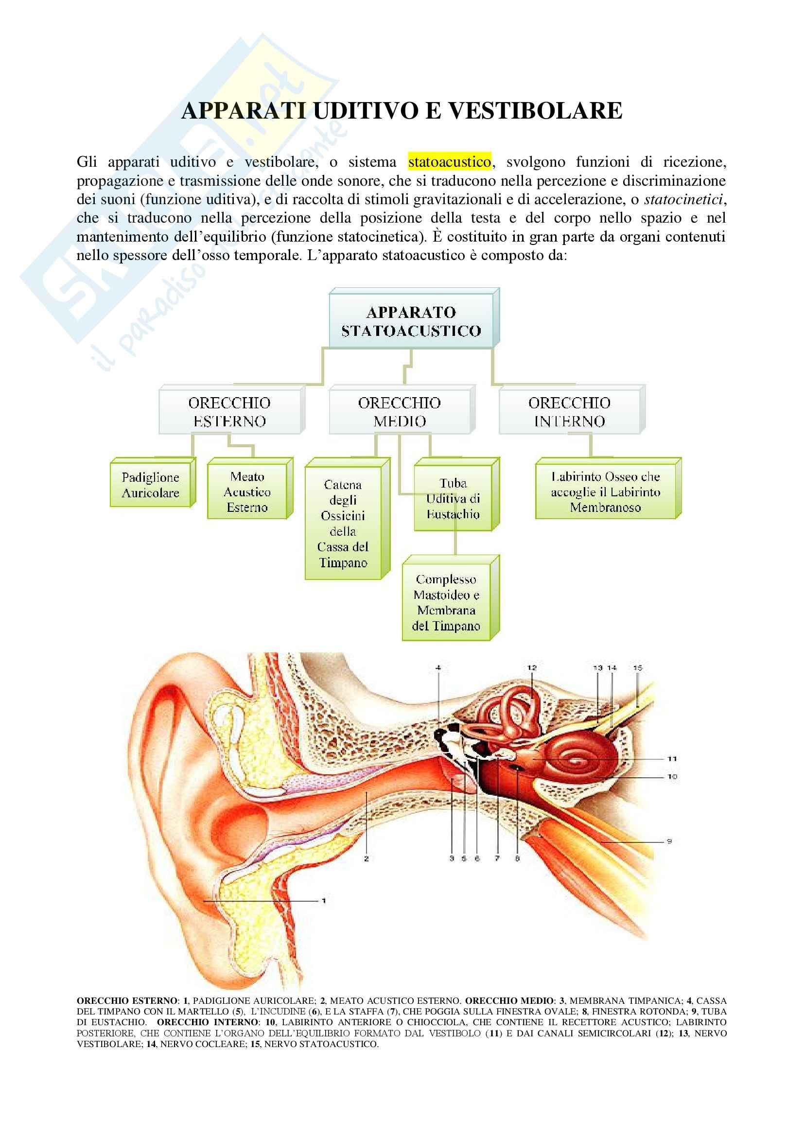 Anatomia umana - apparati uditivo e vestibolare