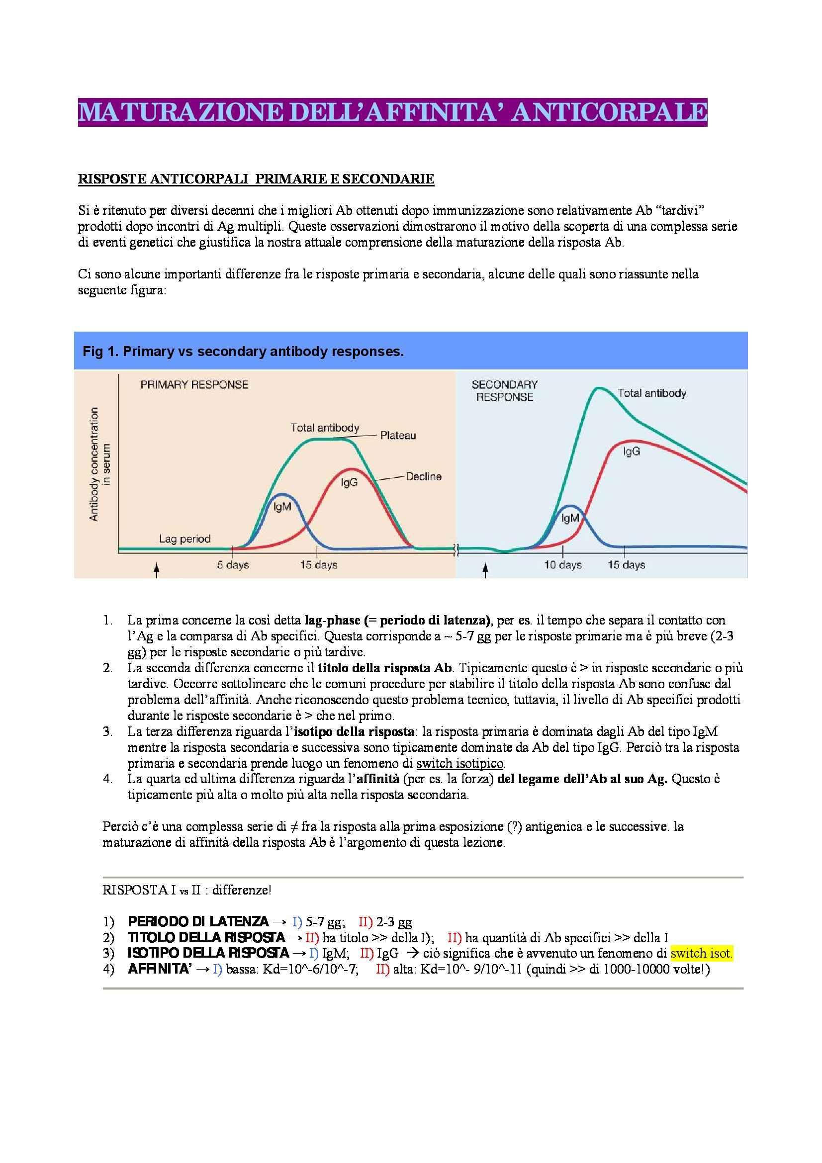 Immunologia - la maturazione dell'affinità anticorporale