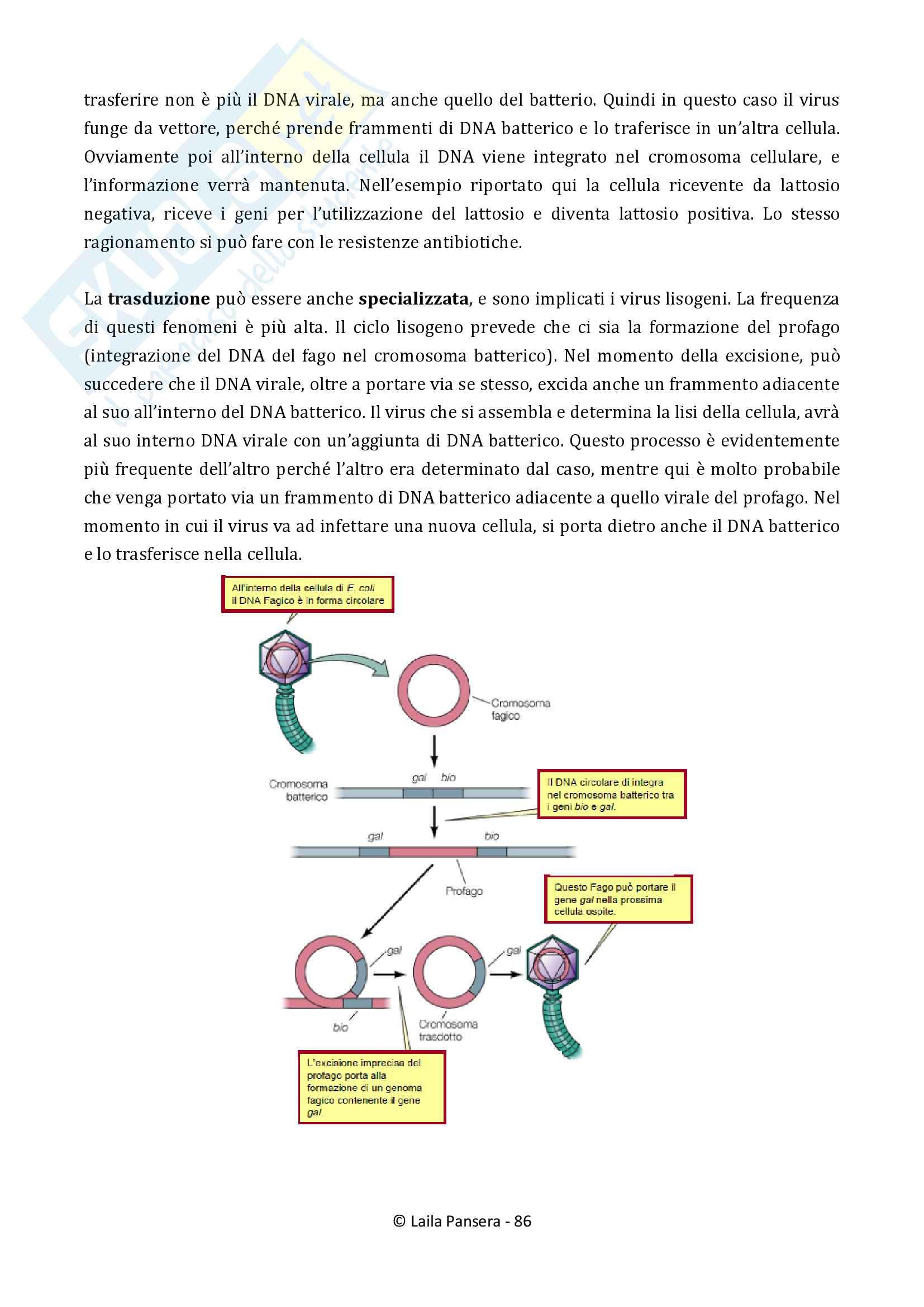 Biologia dei microrganismi Pag. 86