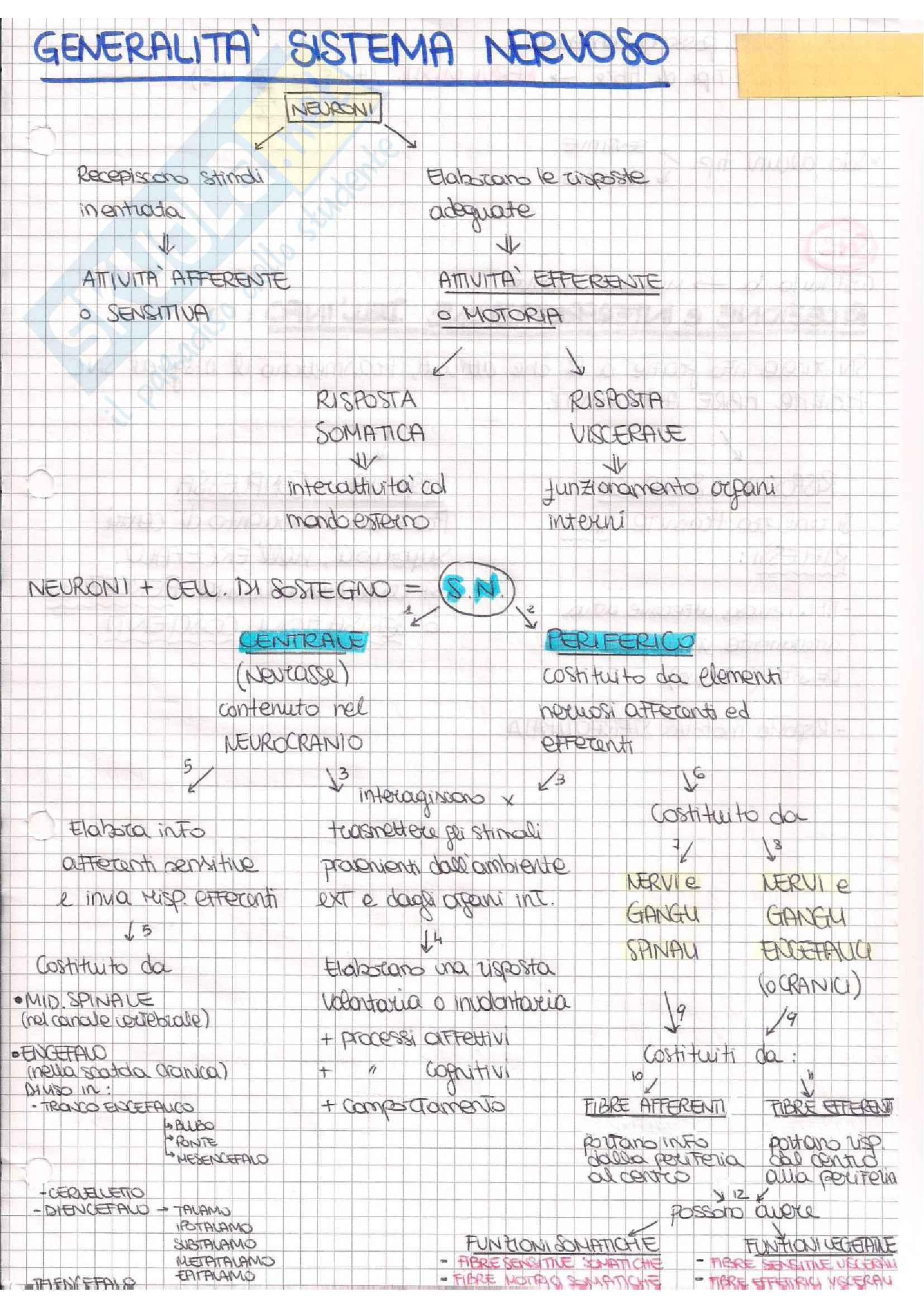 Anatomia III (Neuroanatomia)