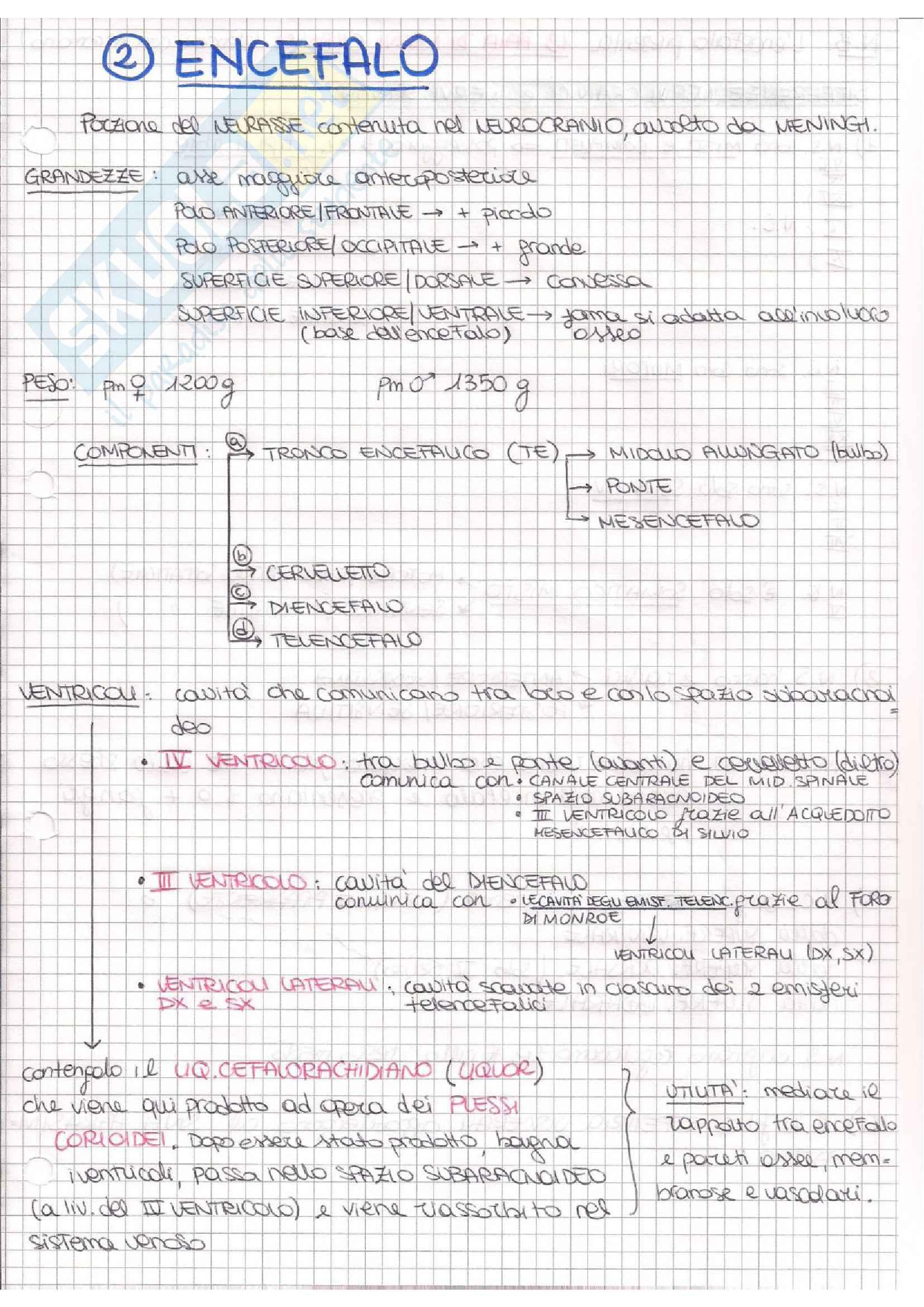 Anatomia III (Neuroanatomia) Pag. 11