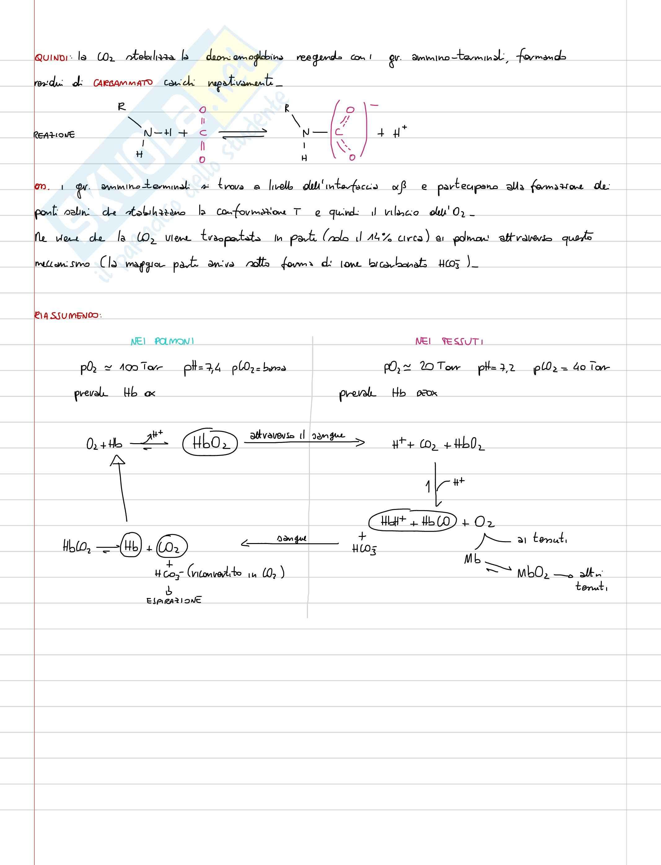 Lezioni, Biochimica Pag. 26