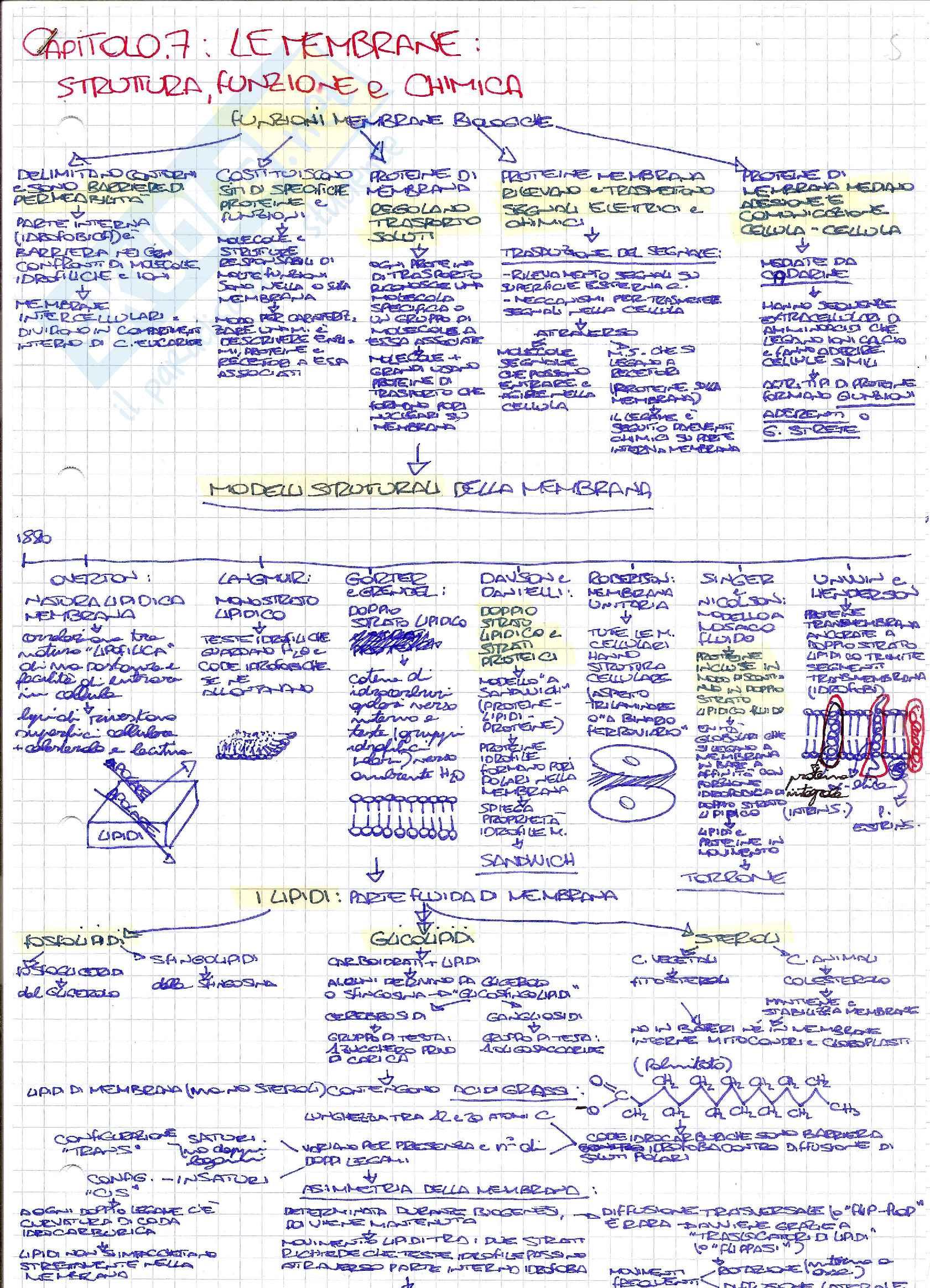 Schemi di biologia generale e cellulare per l'esame della prof. Patrizia Limonta sulla struttura e il funzionamento della membrana cellulare
