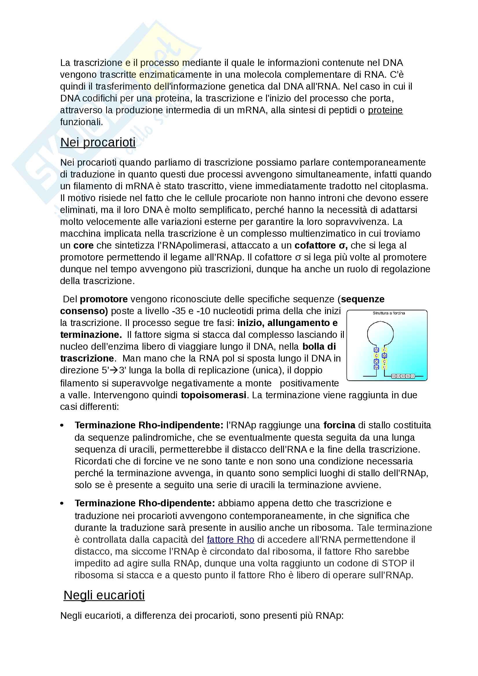 Genetica per biologia Pag. 16