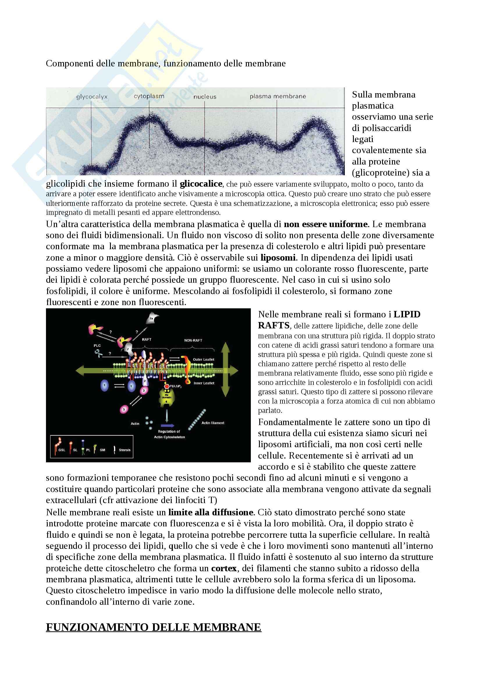 Citologia - trasportatori e canali