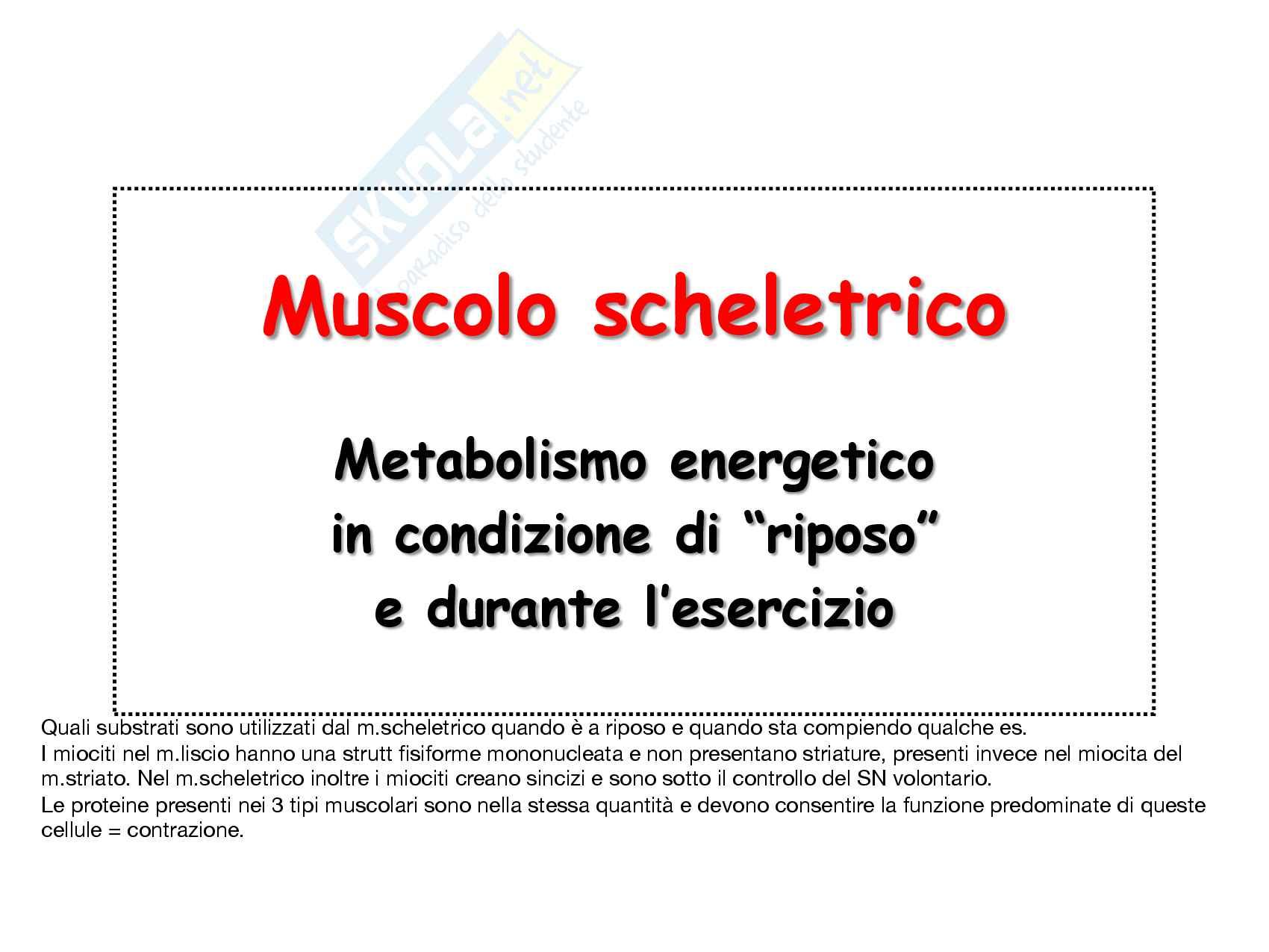 30 Metabolismo energetico nel muscolo a riposo e in esercizio