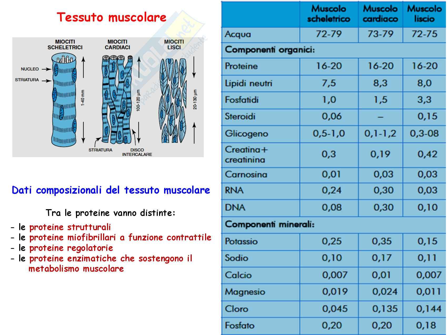 30 Metabolismo energetico nel muscolo a riposo e in esercizio Pag. 2