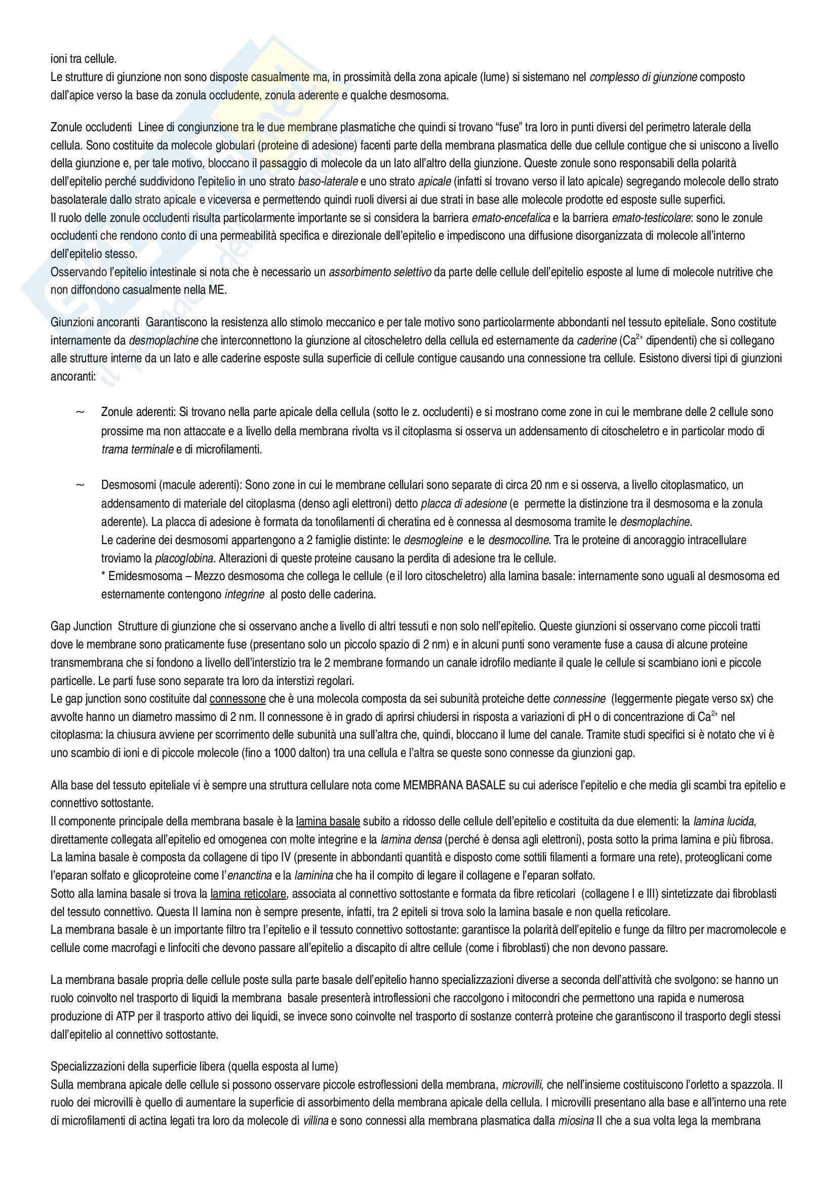Riassunto esame Istologia, Istologia Monesi, prof. Canipari Pag. 11