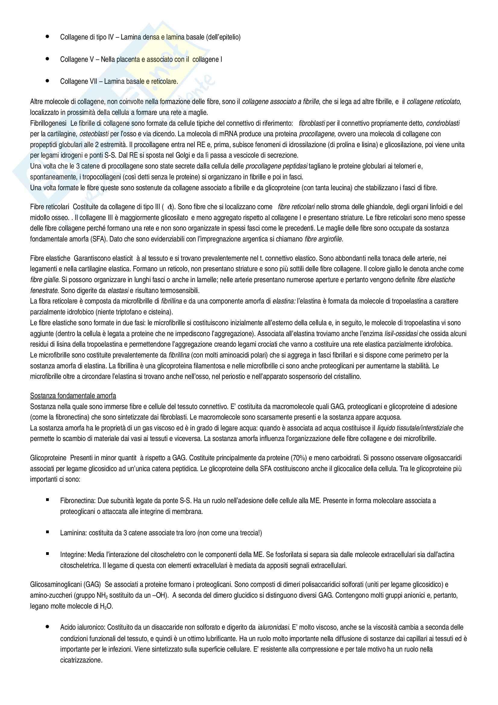 Riassunto esame Istologia, Istologia Monesi, prof. Canipari Pag. 16