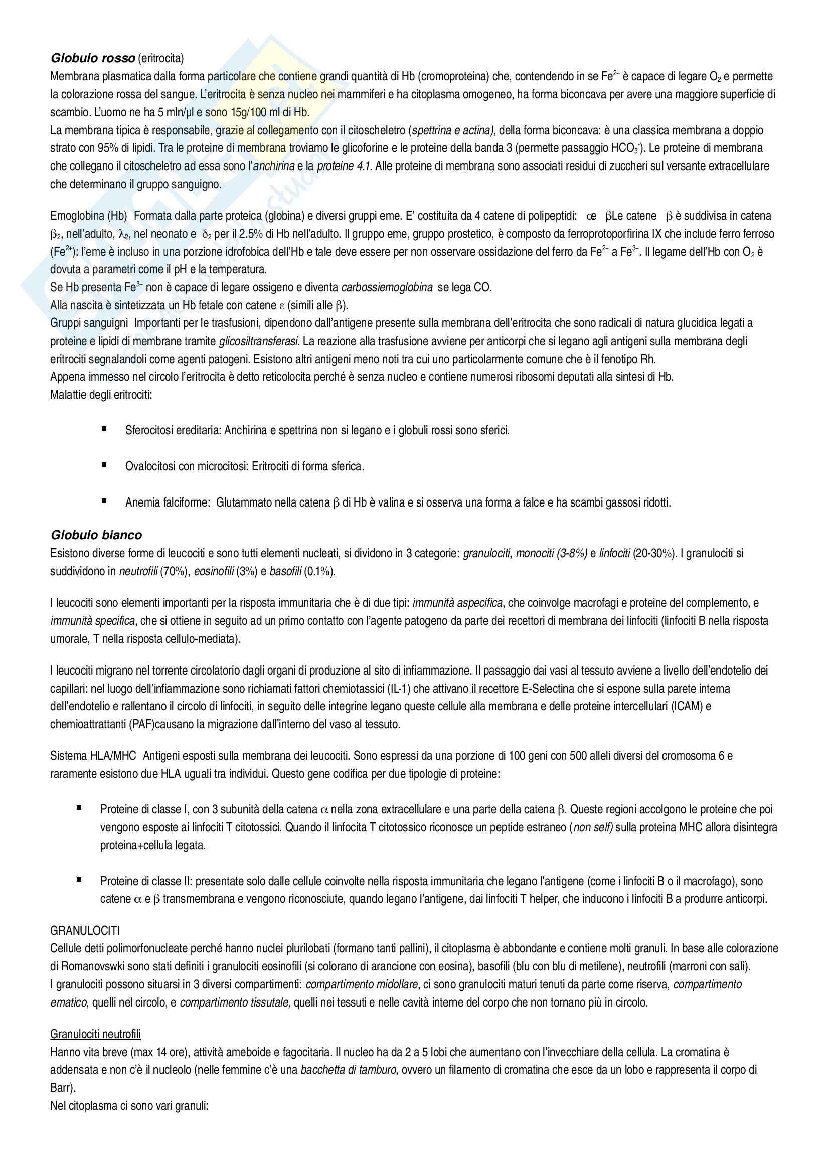 Riassunto esame Istologia, Istologia Monesi, prof. Canipari Pag. 26